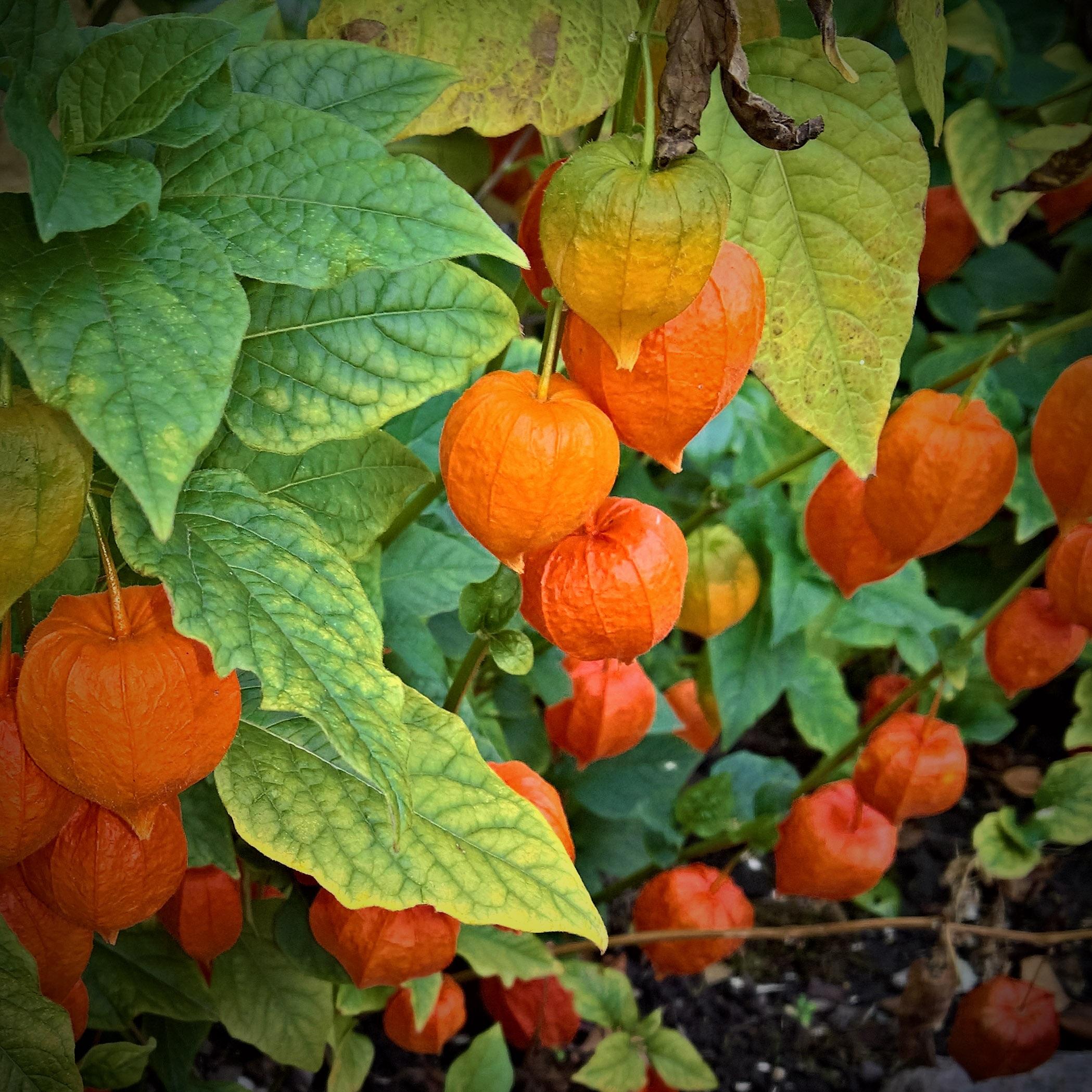 Fotos gratis : naturaleza, Fruta, hoja, flor, comida, Produce ...