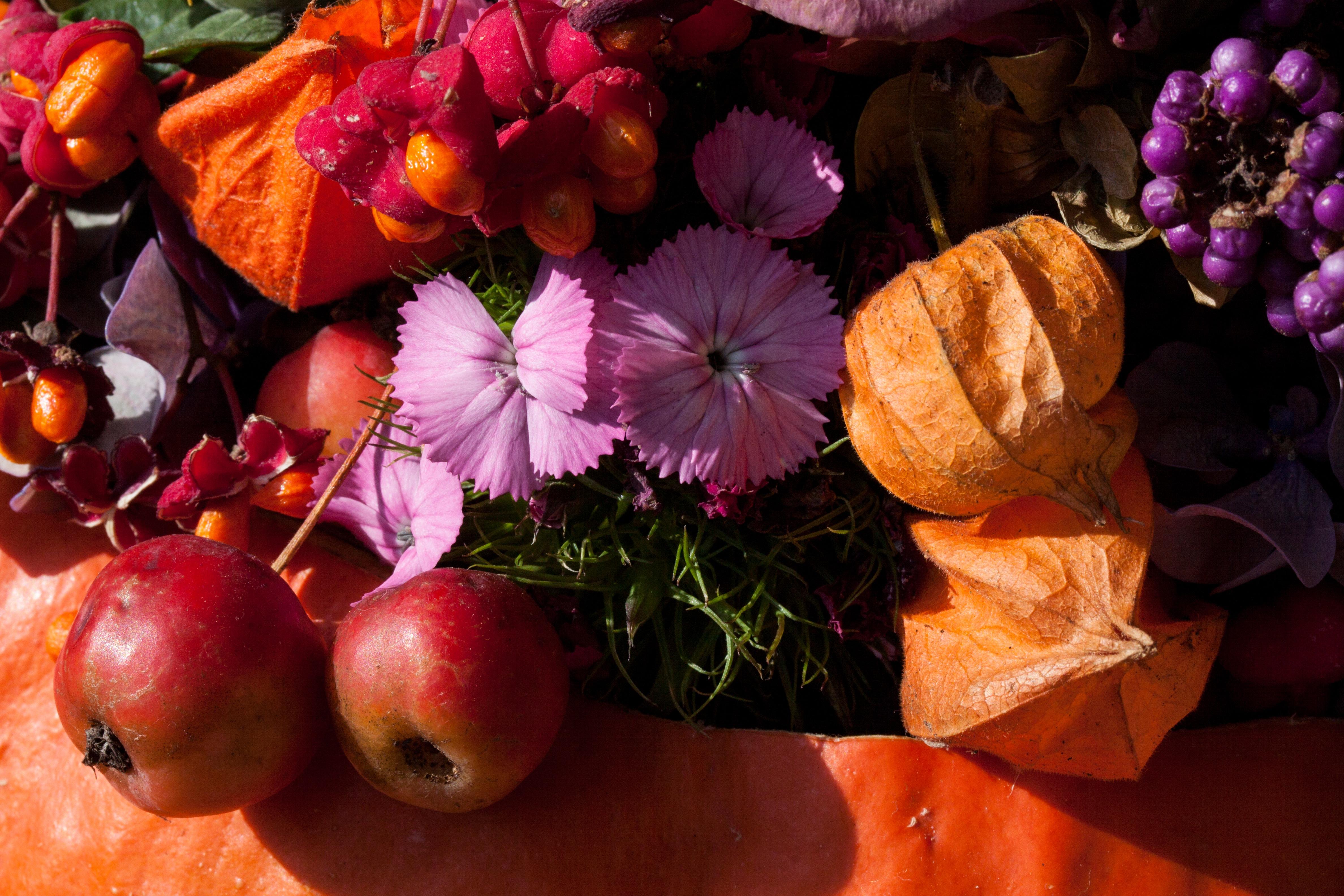 Fotoğraf Doğa Meyve Yaprak çiçek Taçyaprağı Buket Portakal