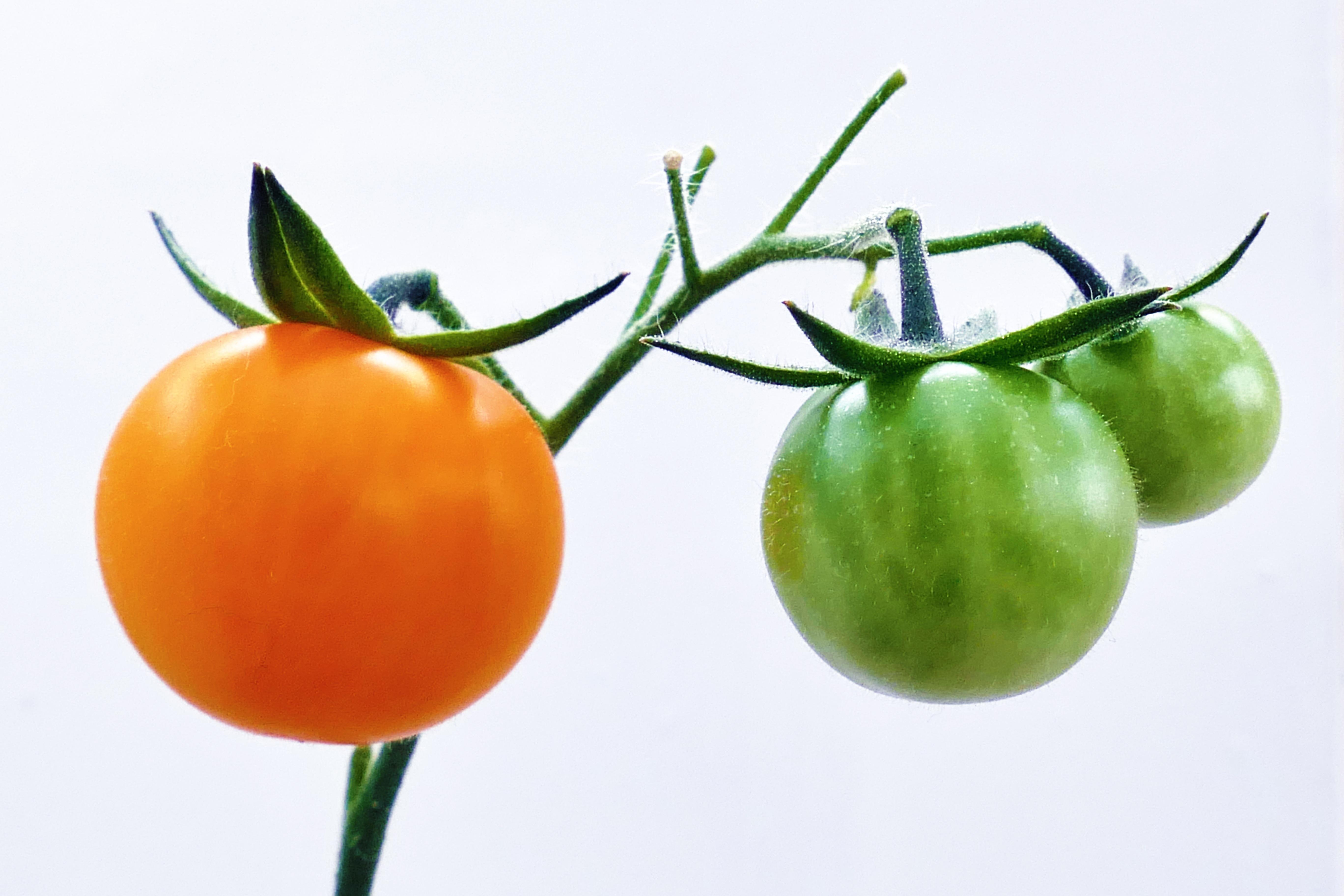 Kostenlose foto : Natur, Frucht, reif, Orange, Lebensmittel, Grün ...