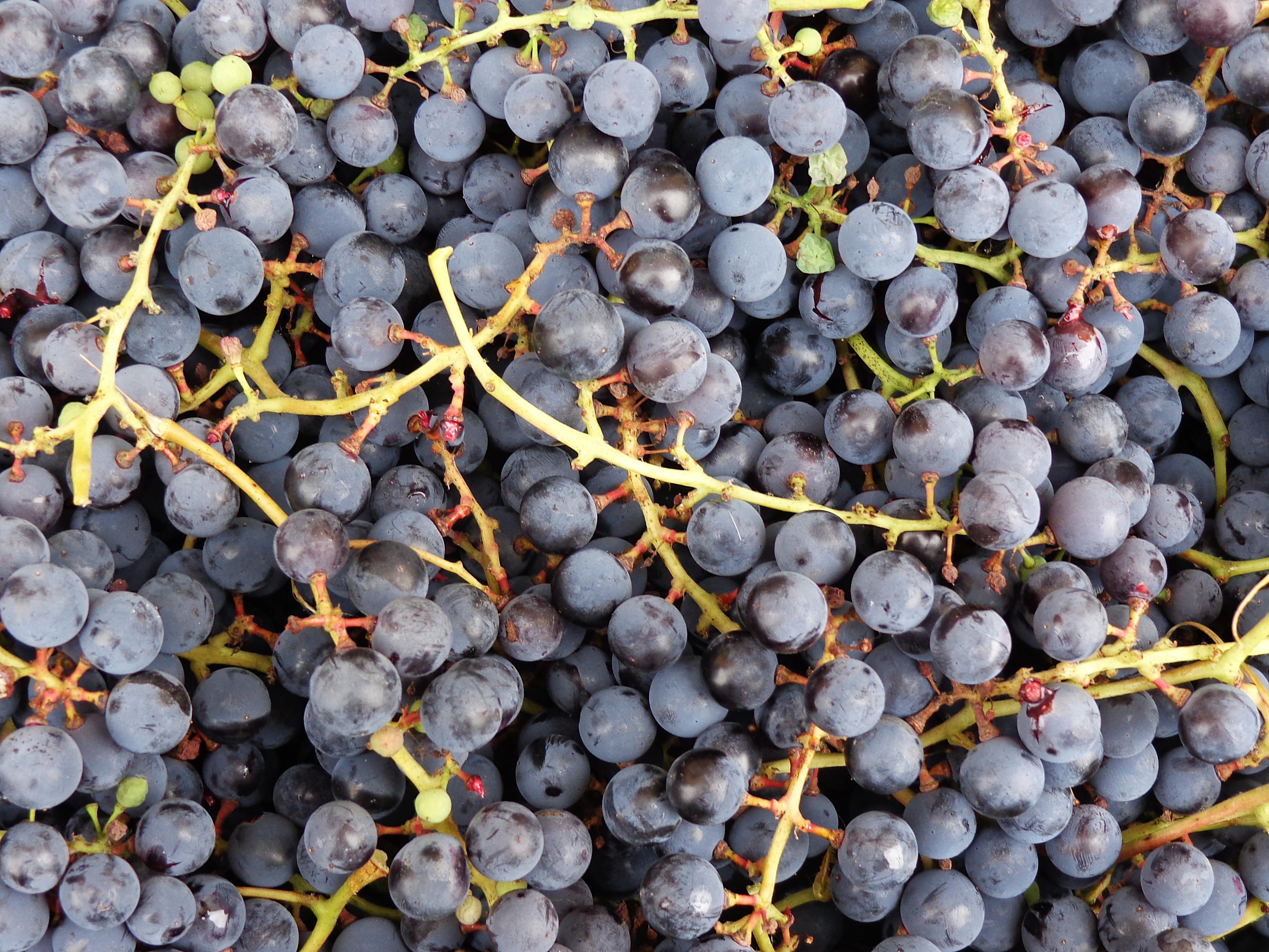 Viinirypäle Vitamiinit