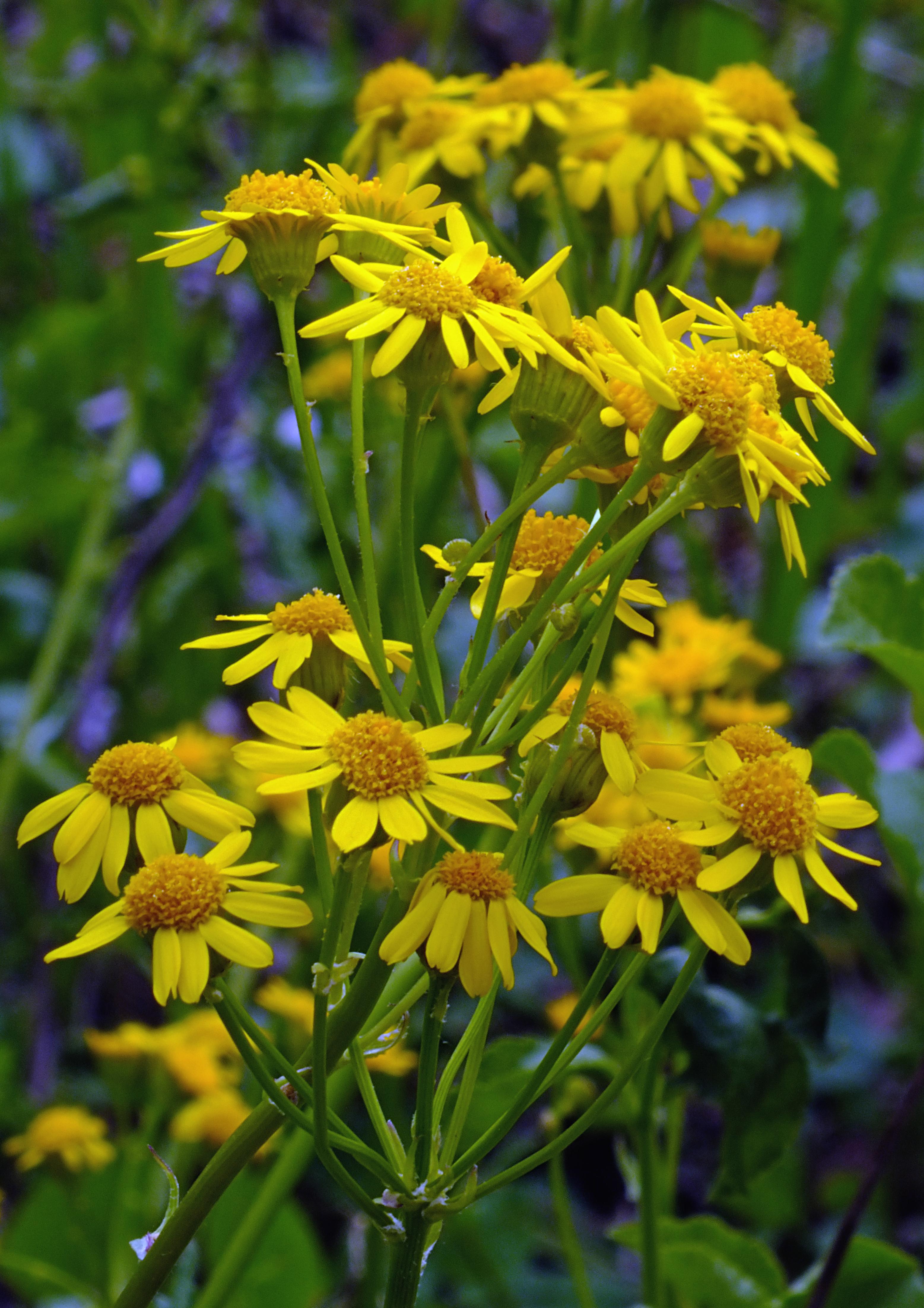 Free Images Nature Hiking Meadow Prairie Flower Spring Herb