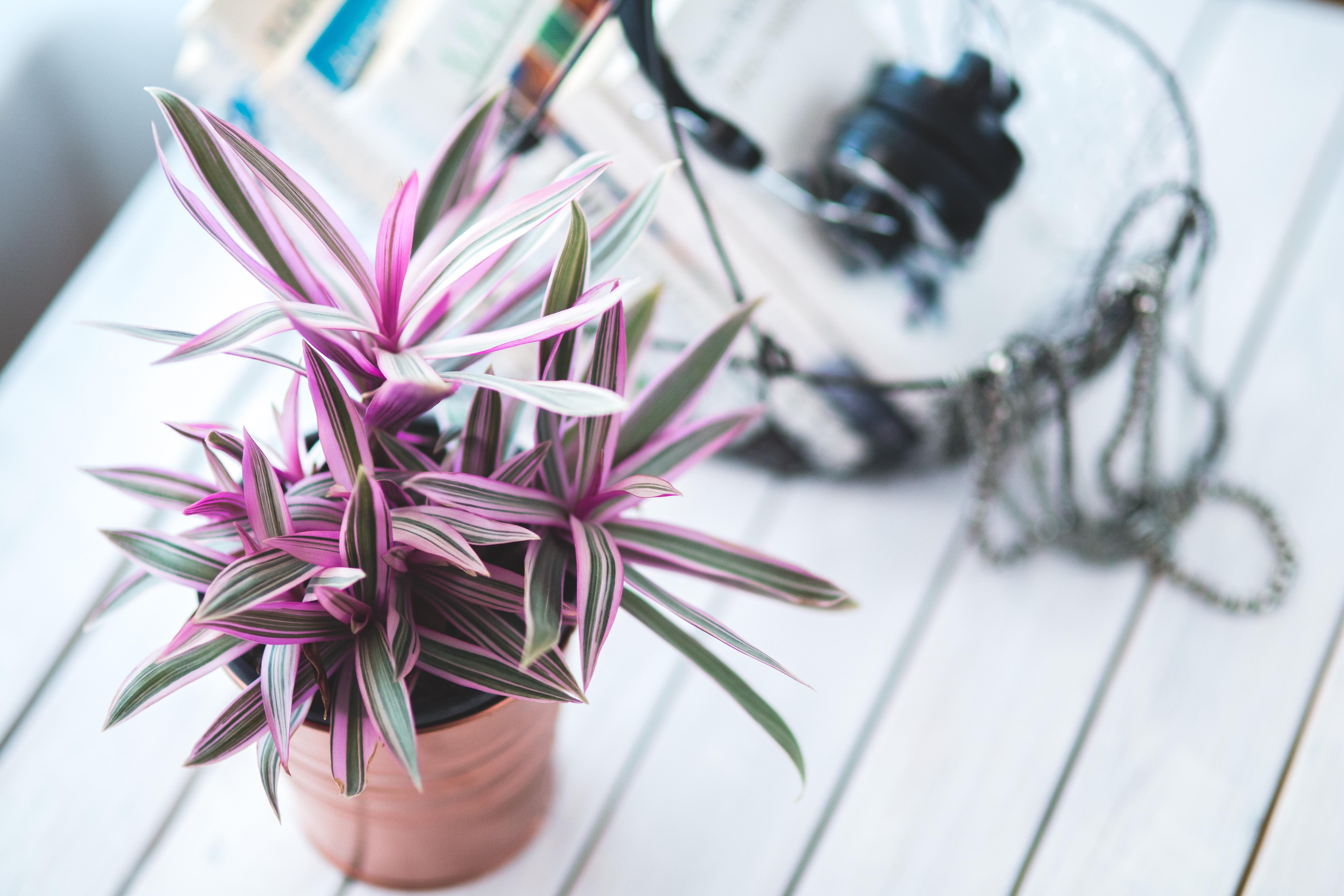 Images Gratuites : La Nature, Plante, Maison, Feuille