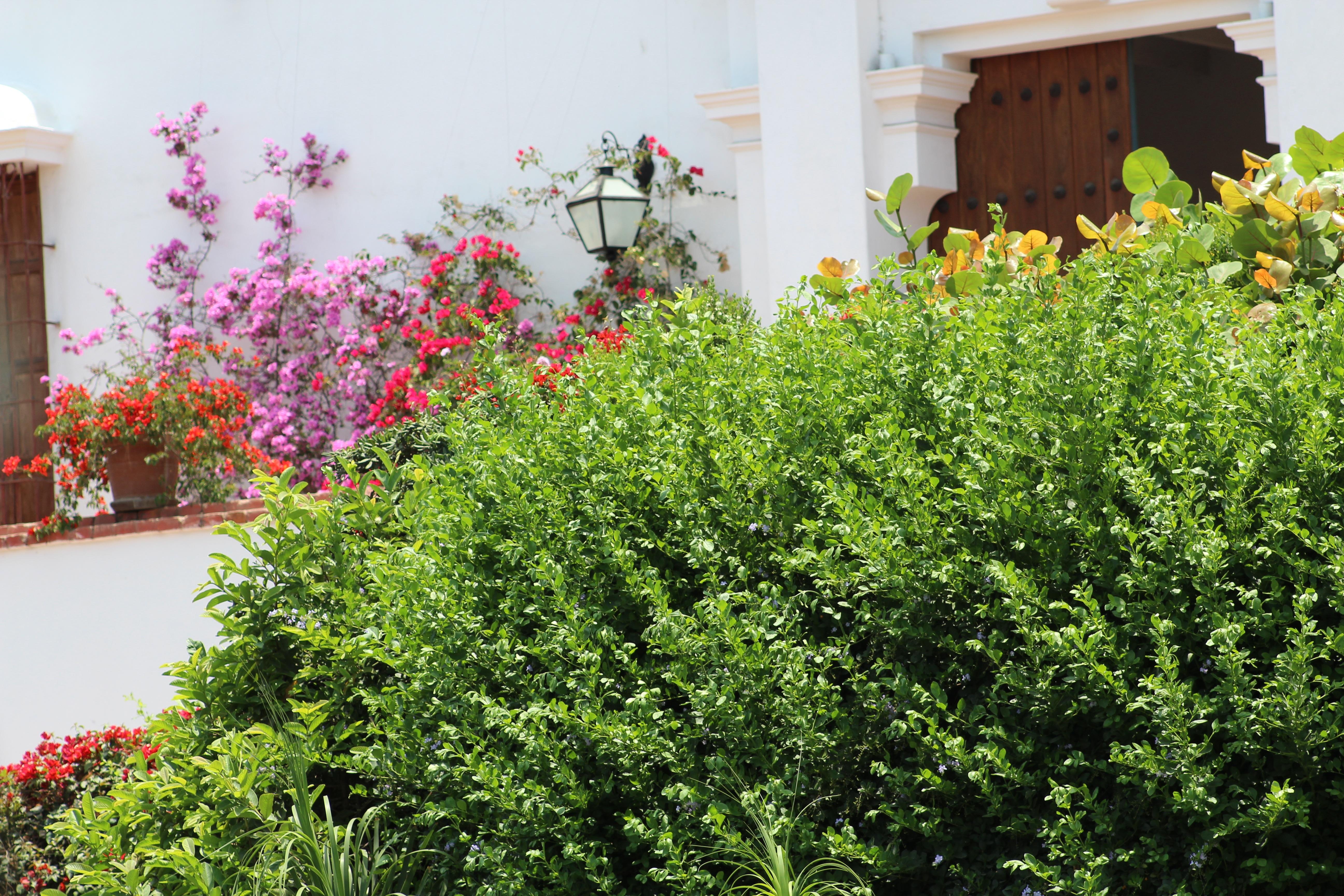 Kostenlose foto Natur Rasen Blume Frühling Grün Kraut
