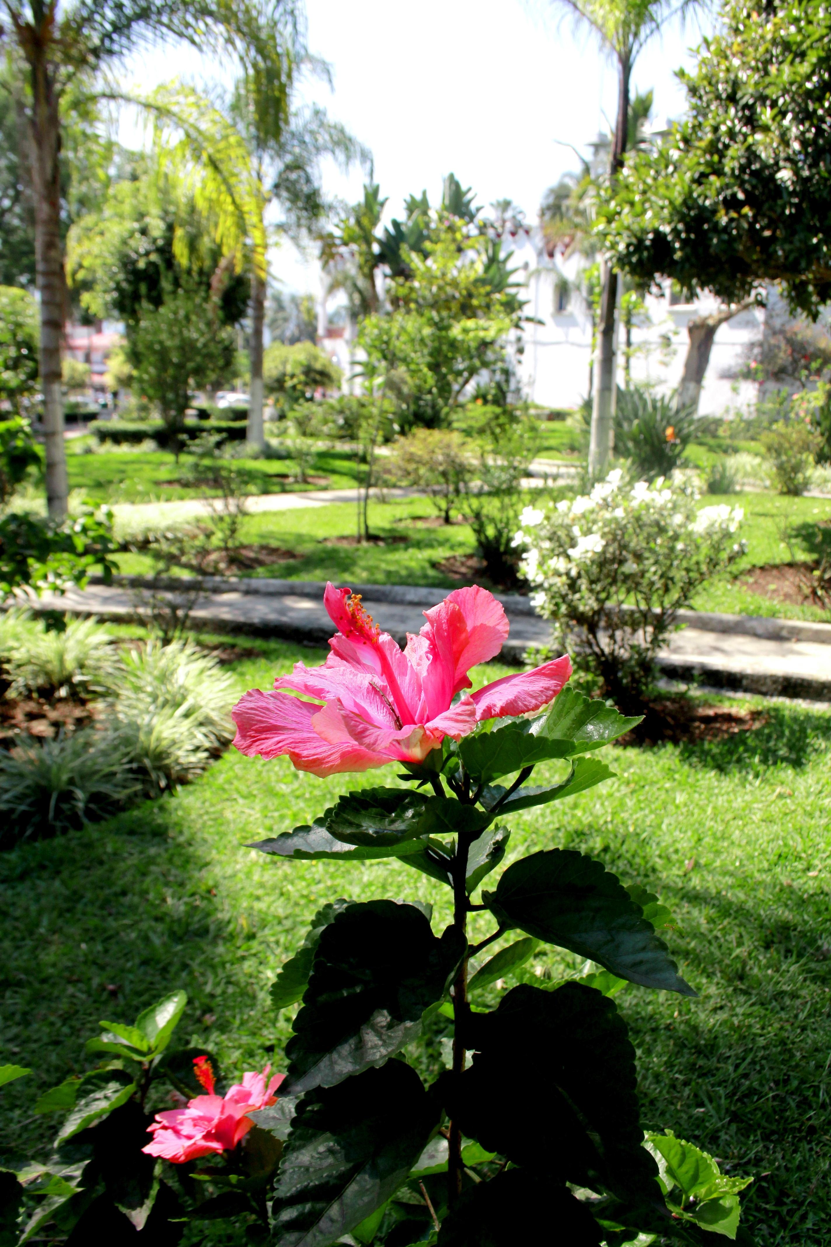 Free Images Nature Lawn Flower Spring Park Backyard Botany