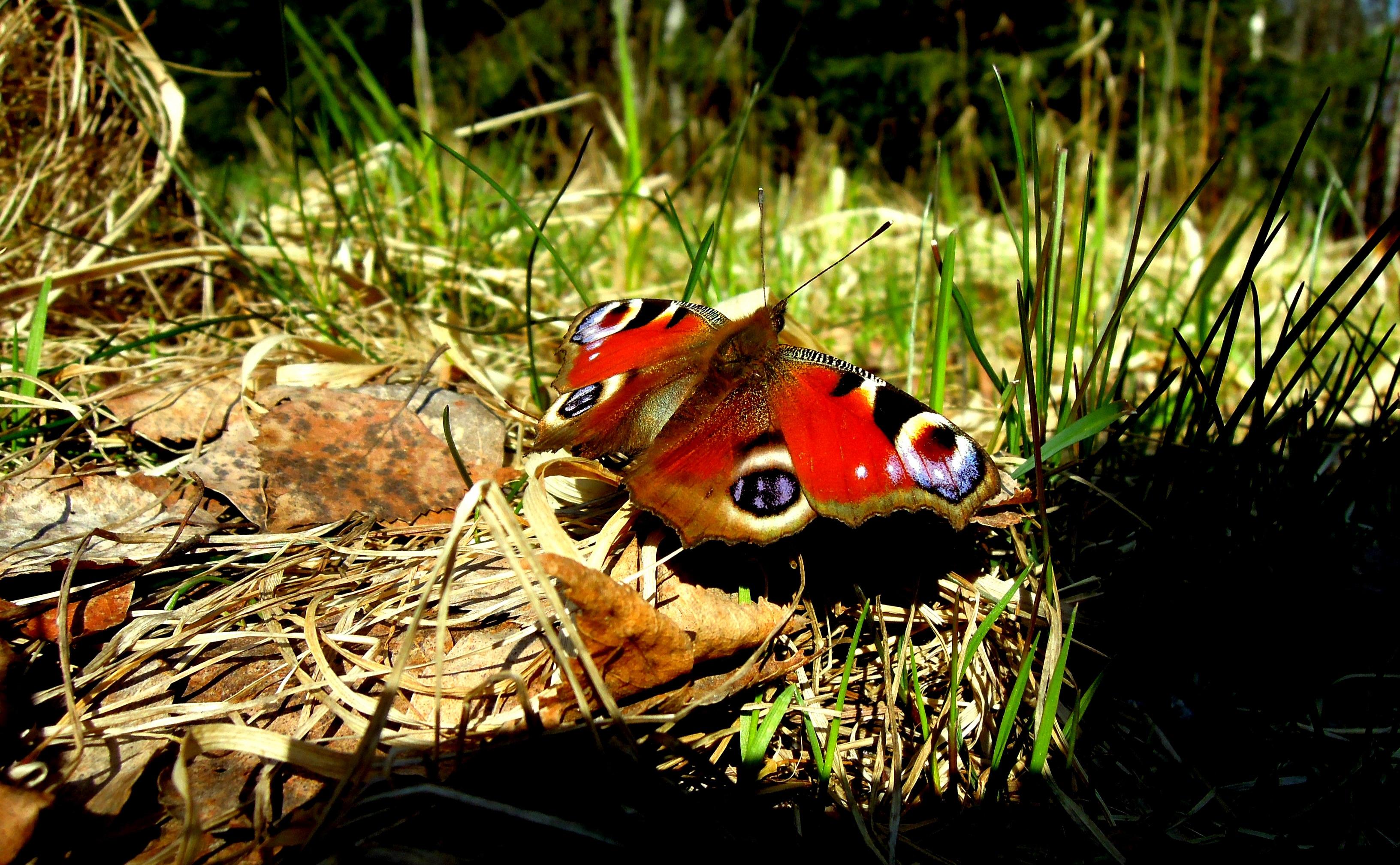 Звуки бабочек скачать
