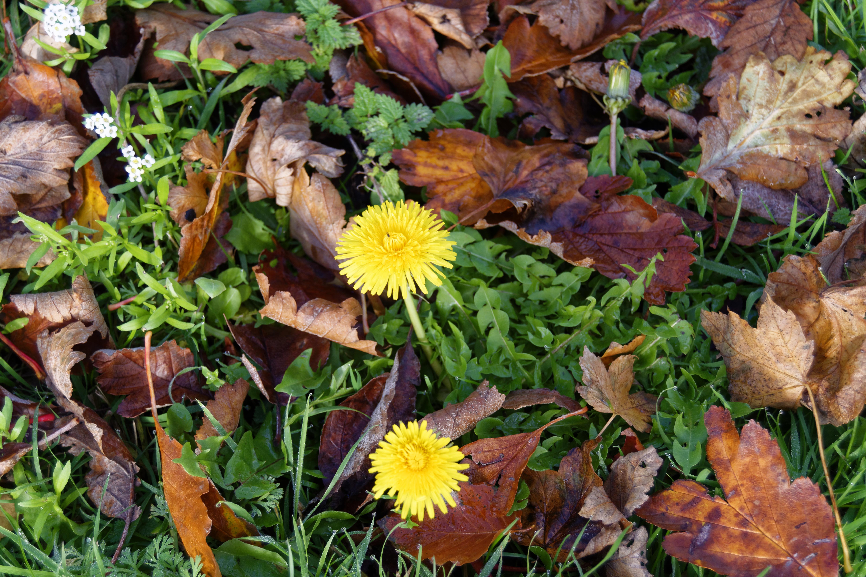 для осенние лесные цветы картинки этой статье