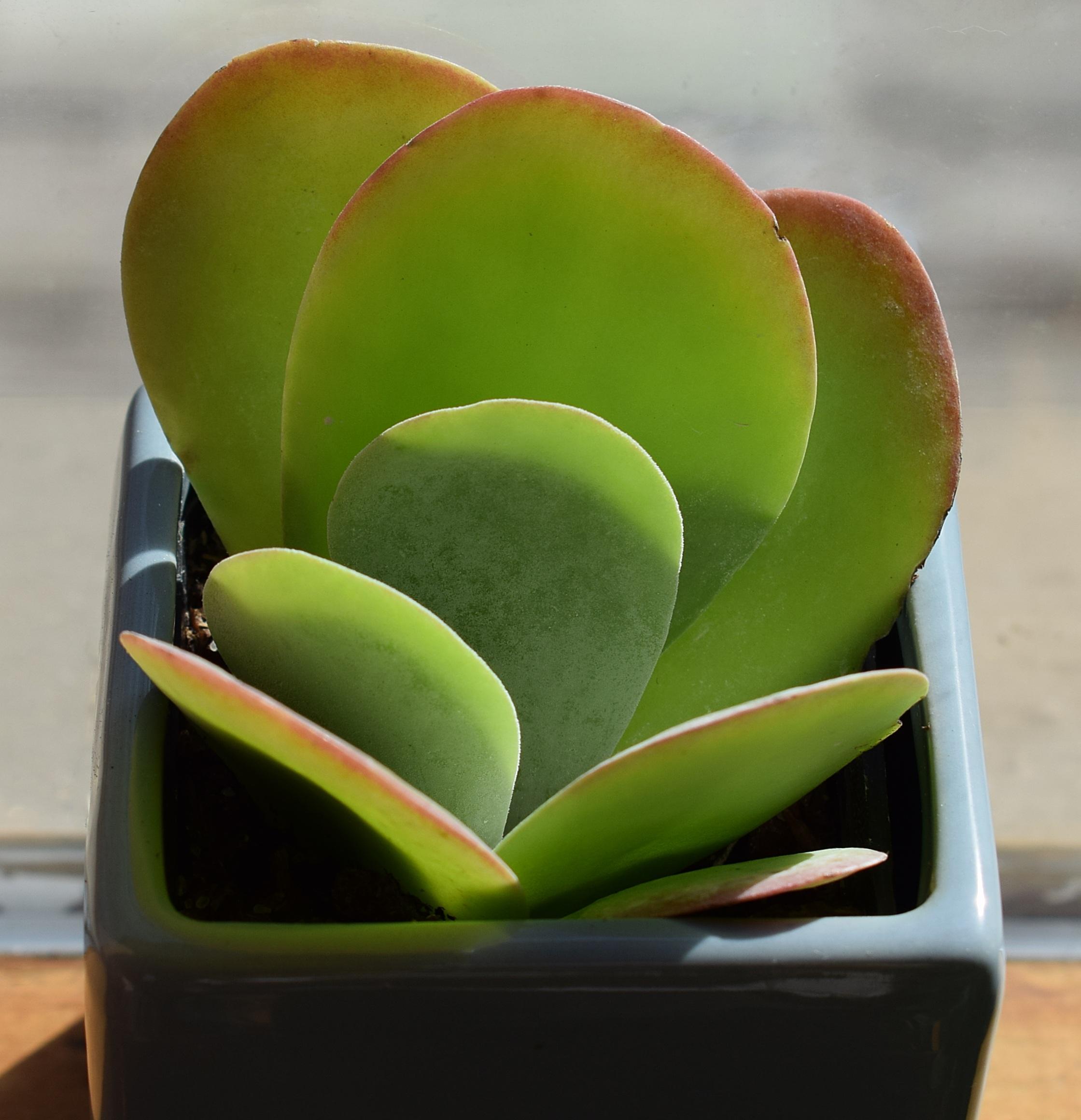 Kostenlose Foto Natur Blatt Blume Grun Naturlich Klein Blau