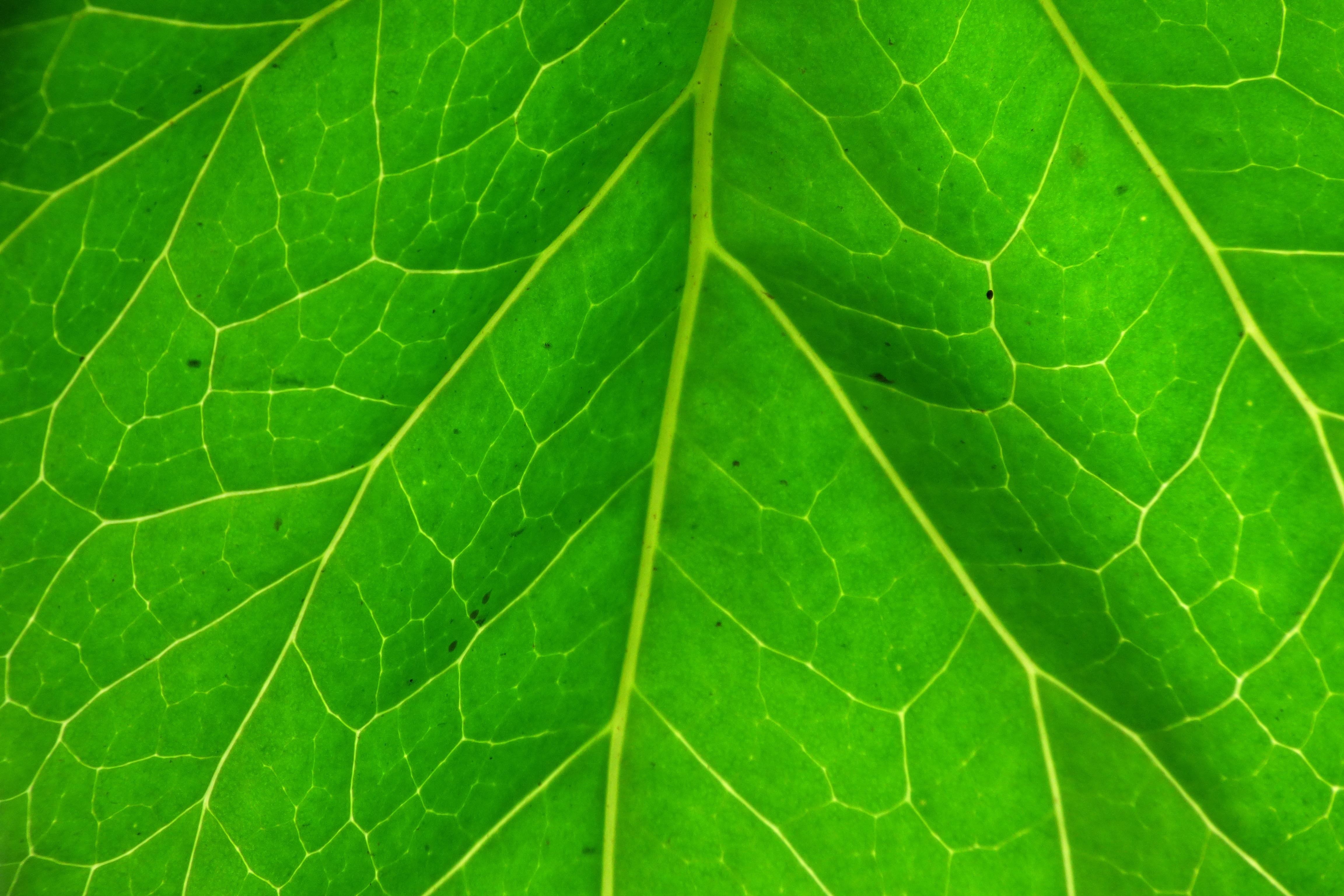 Fotos gratis naturaleza flor suelo venas iluminar for Papel pintado hojas verdes
