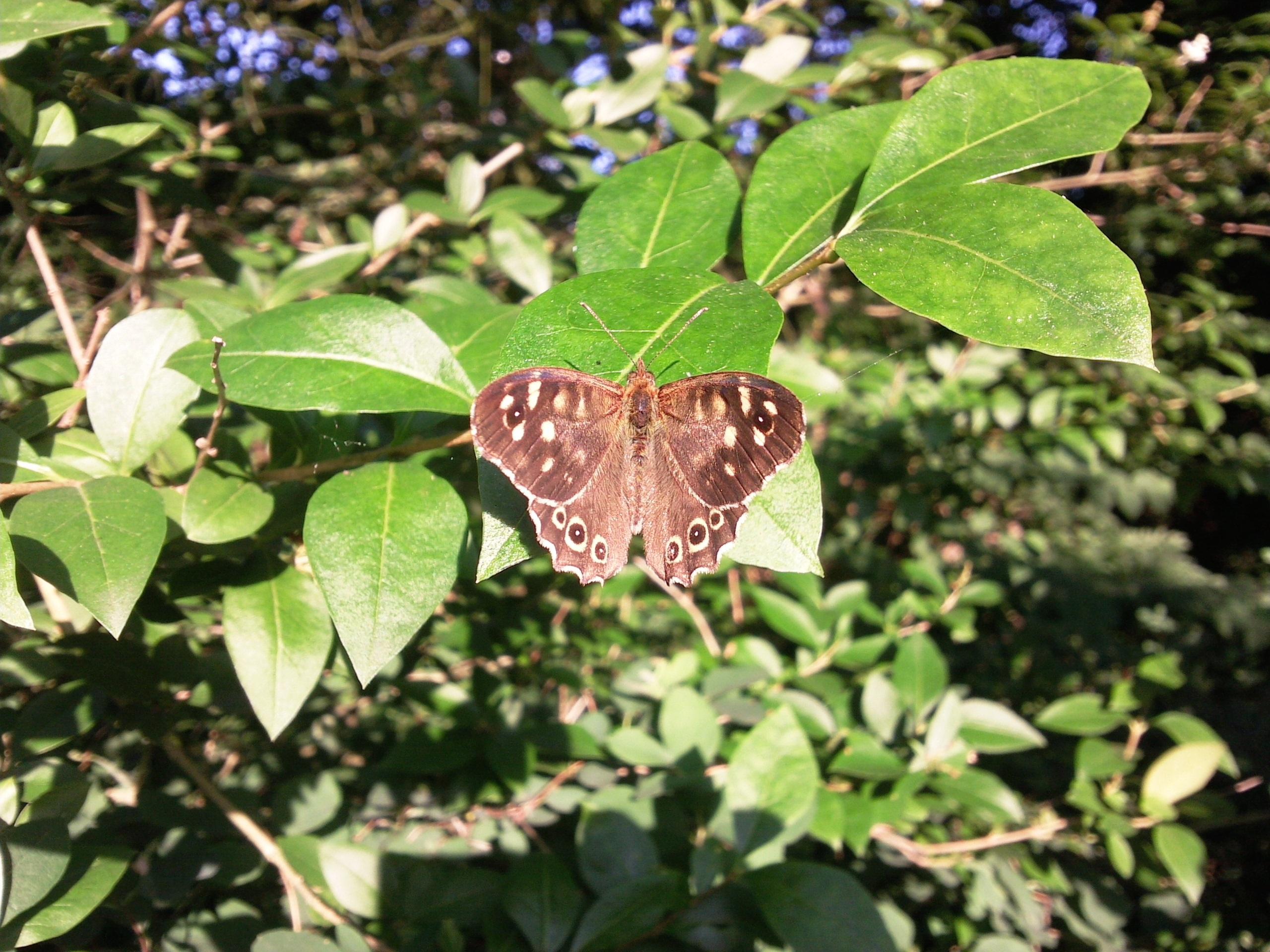Gambar Alam Menanam Daun Bunga Serangga Botani Flora Fauna