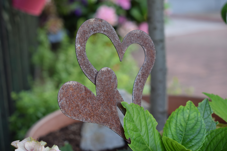 Free Images : nature, leaf, flower, love, green, symbol, botany ...