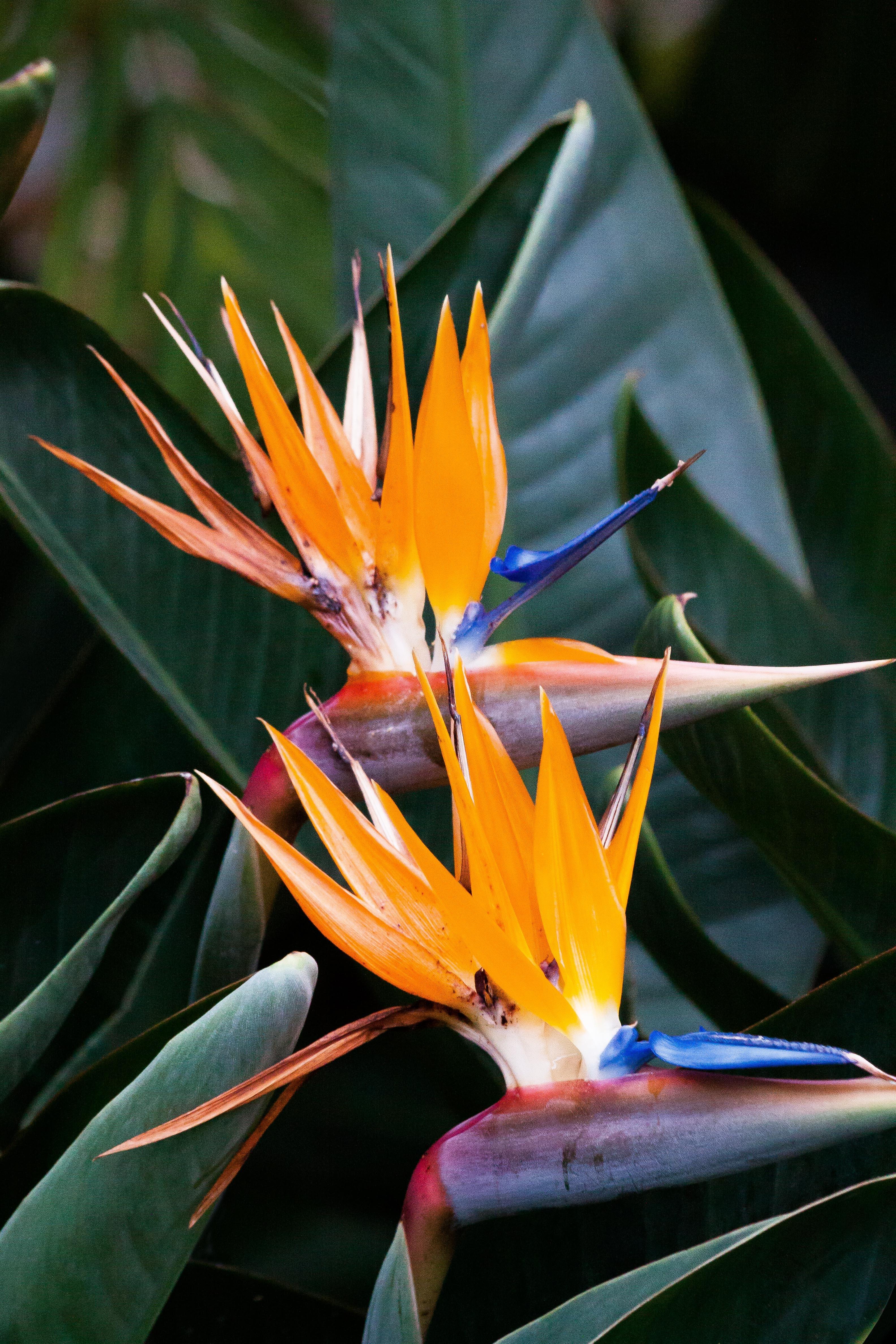 plante exotique couleur