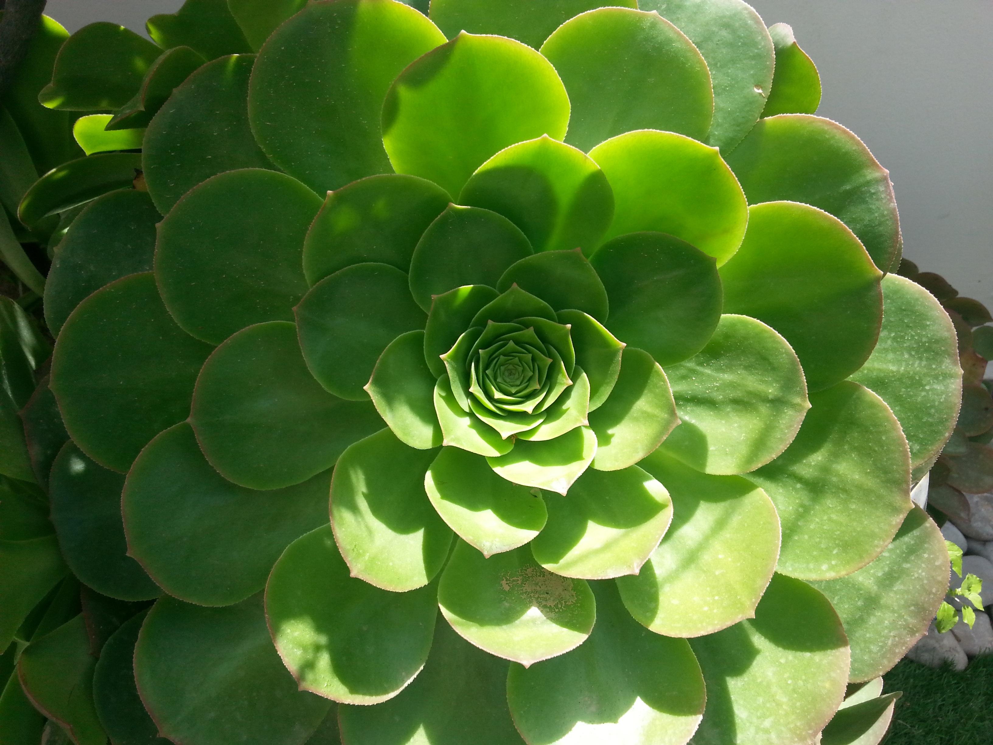Fotos gratis : naturaleza, hoja, flor, pétalo, ambiente, patrón ...