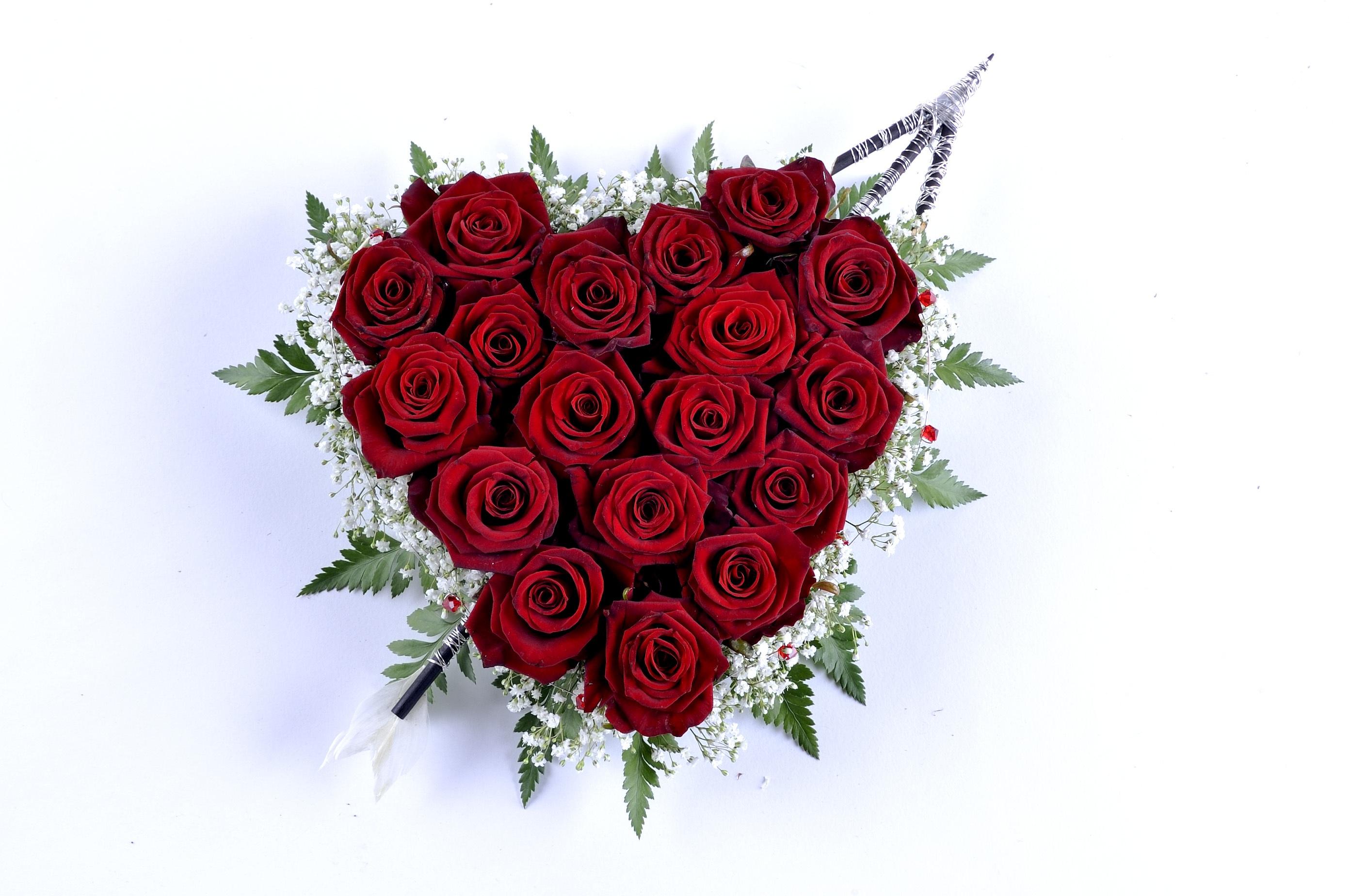 Images Gratuites La Nature Feuille Fleur Petale Amour Cœur