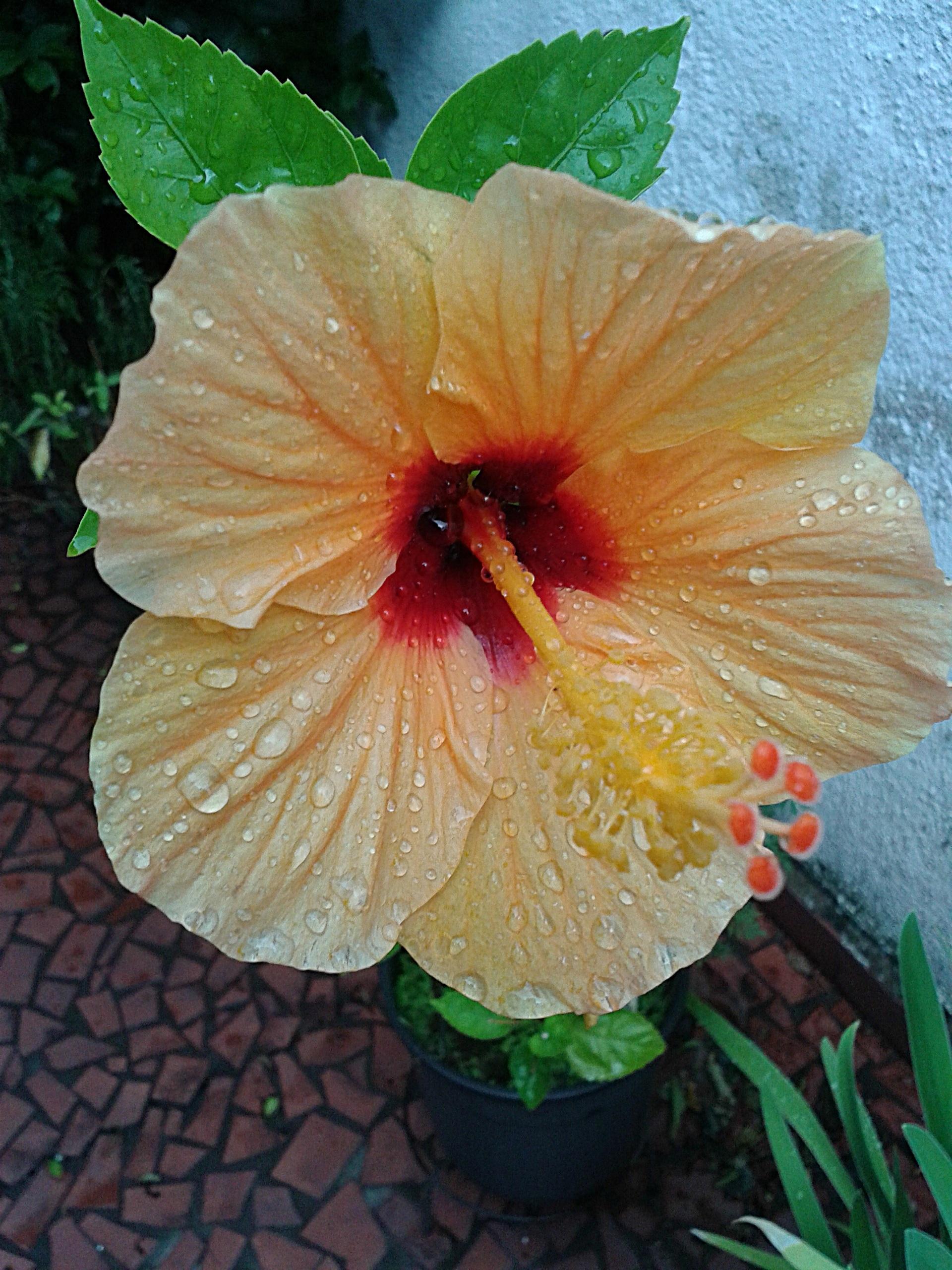 Images Gratuites : la nature, feuille, fleur, pétale, pot, vase ...