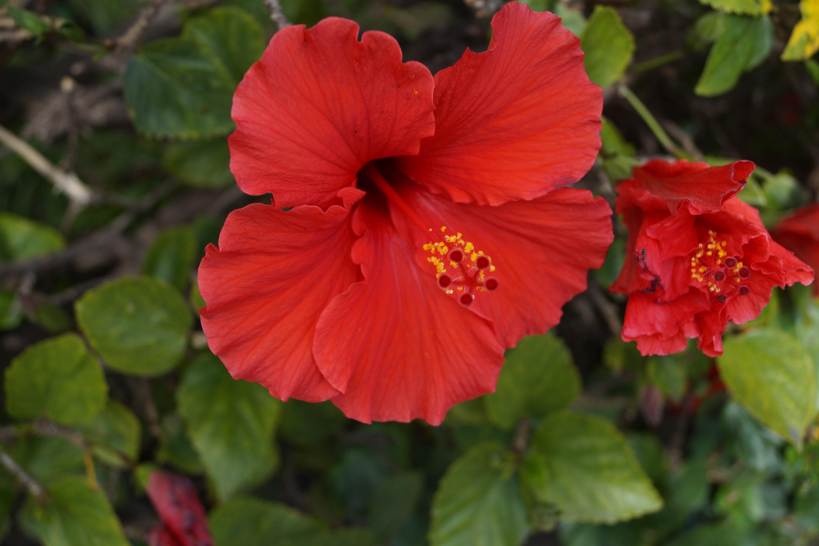 Gambar Alam Menanam Daun Bunga Botani Taman Flora Bunga