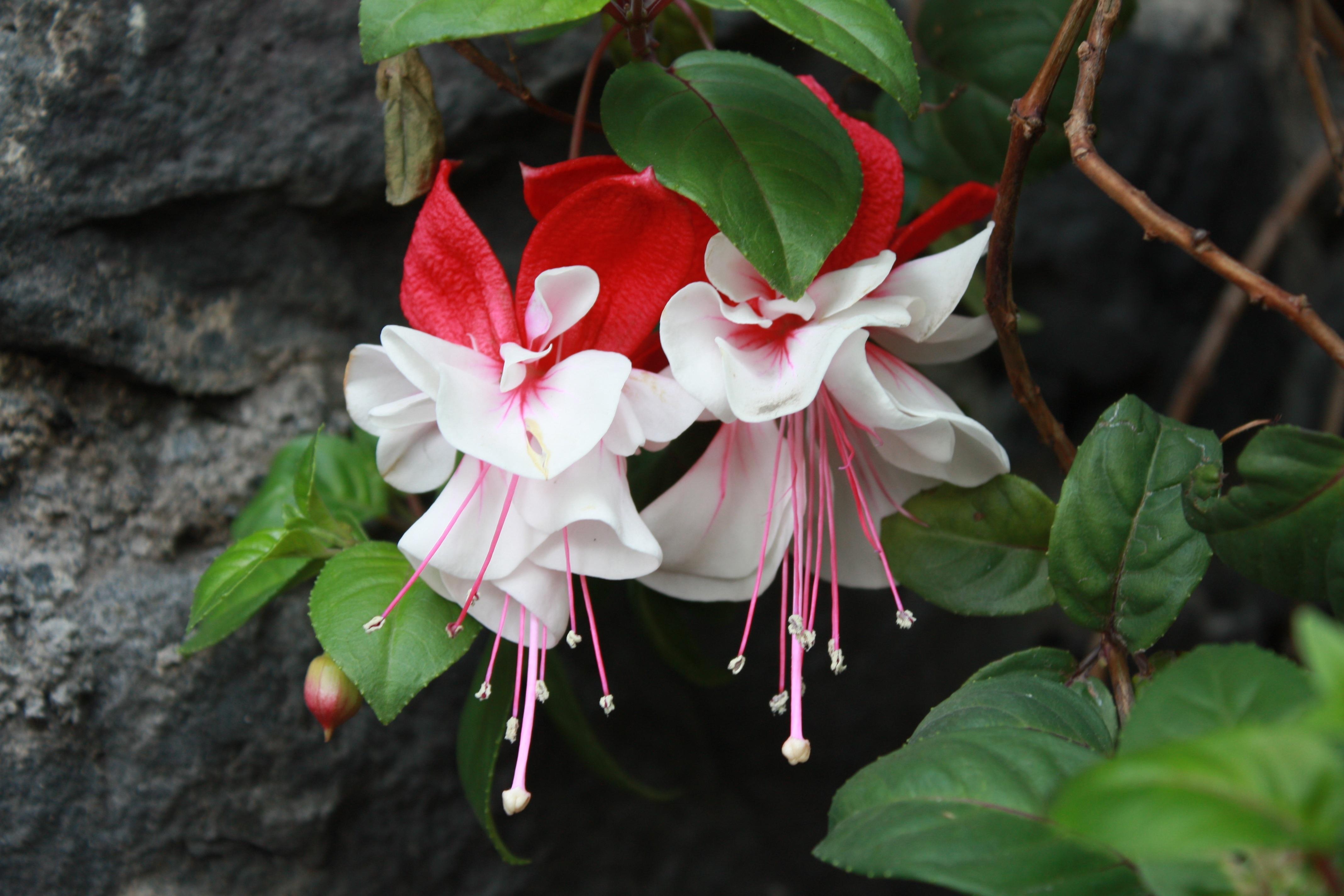 комнатные цветы которые красиво цветут картинки сезон шашлыков дачной