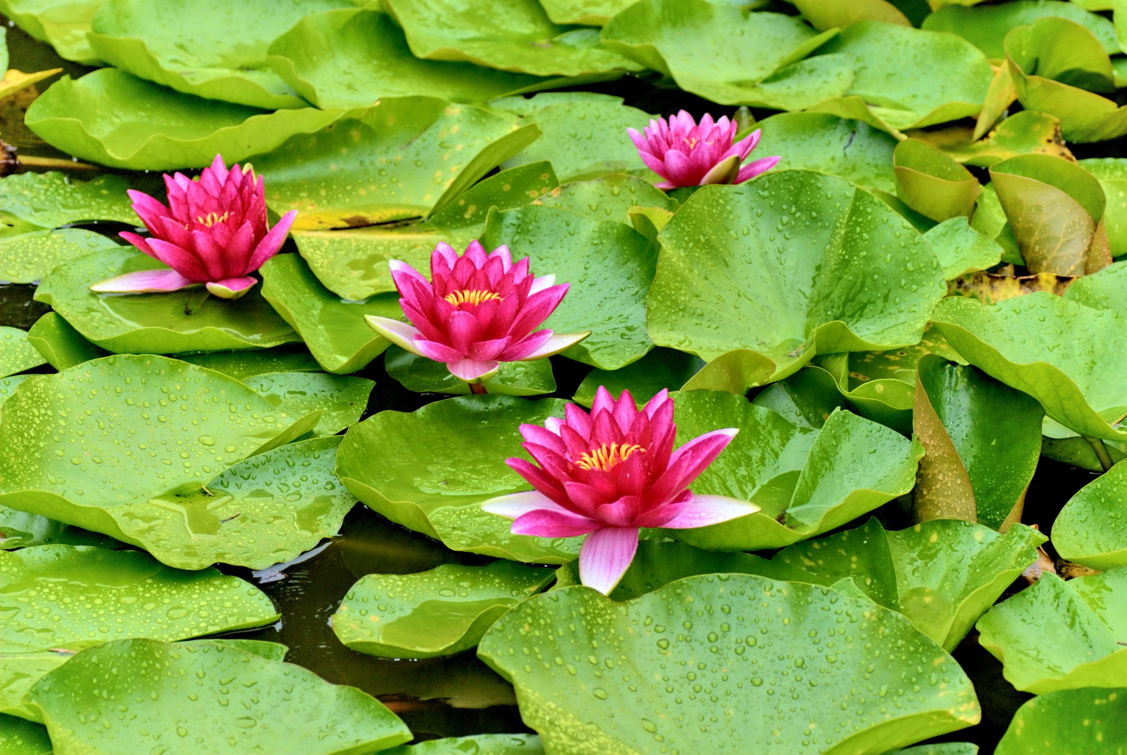 многих водные растения названия советуют