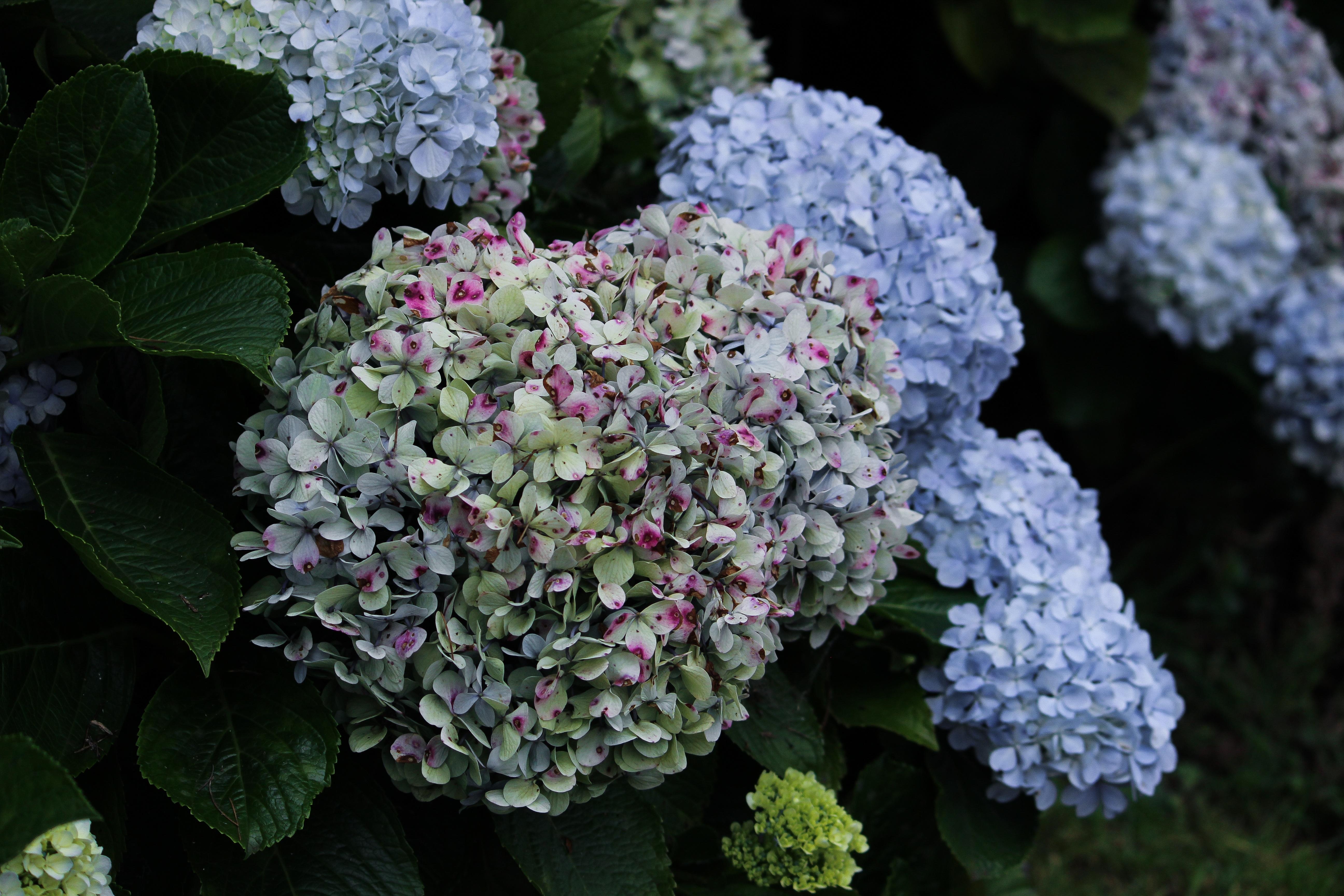Fotoğraf Doğa Yaprak çiçek Taçyaprağı Yaz Doğal Botanik
