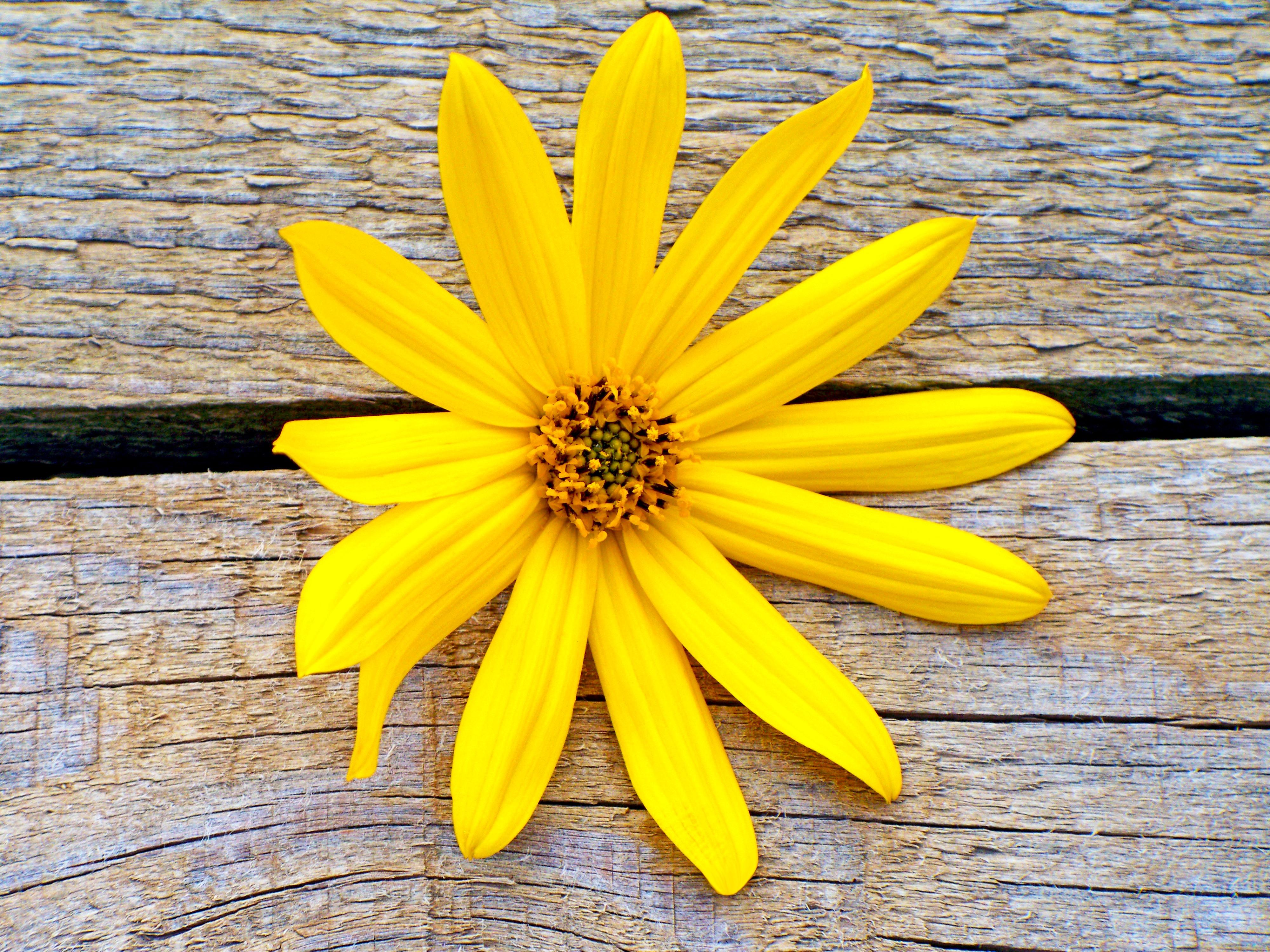 Kostenlose foto Natur Blatt Blume Blütenblatt Sommer
