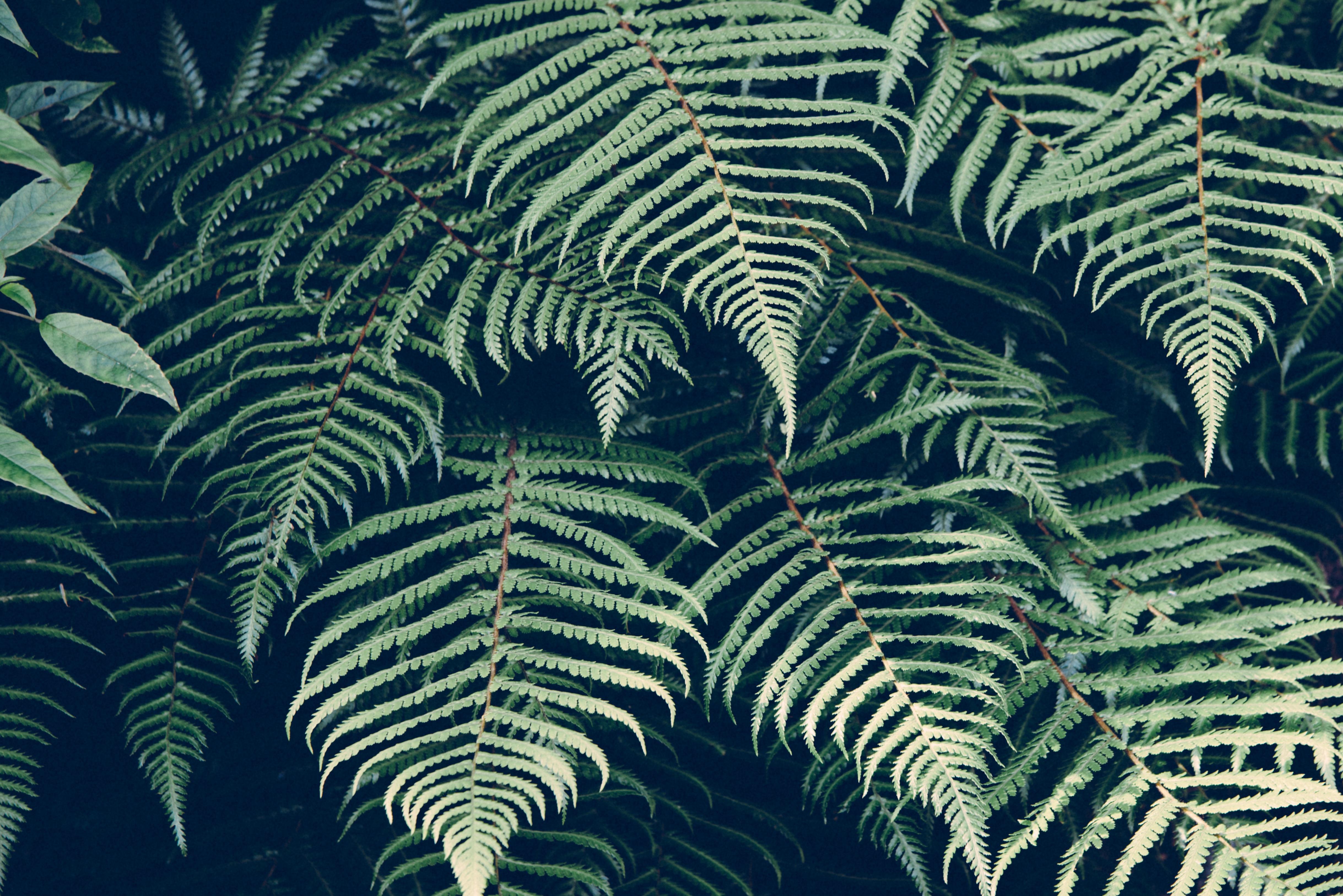 Gratis billeder natur plante blad m nster linje for Plante jungle