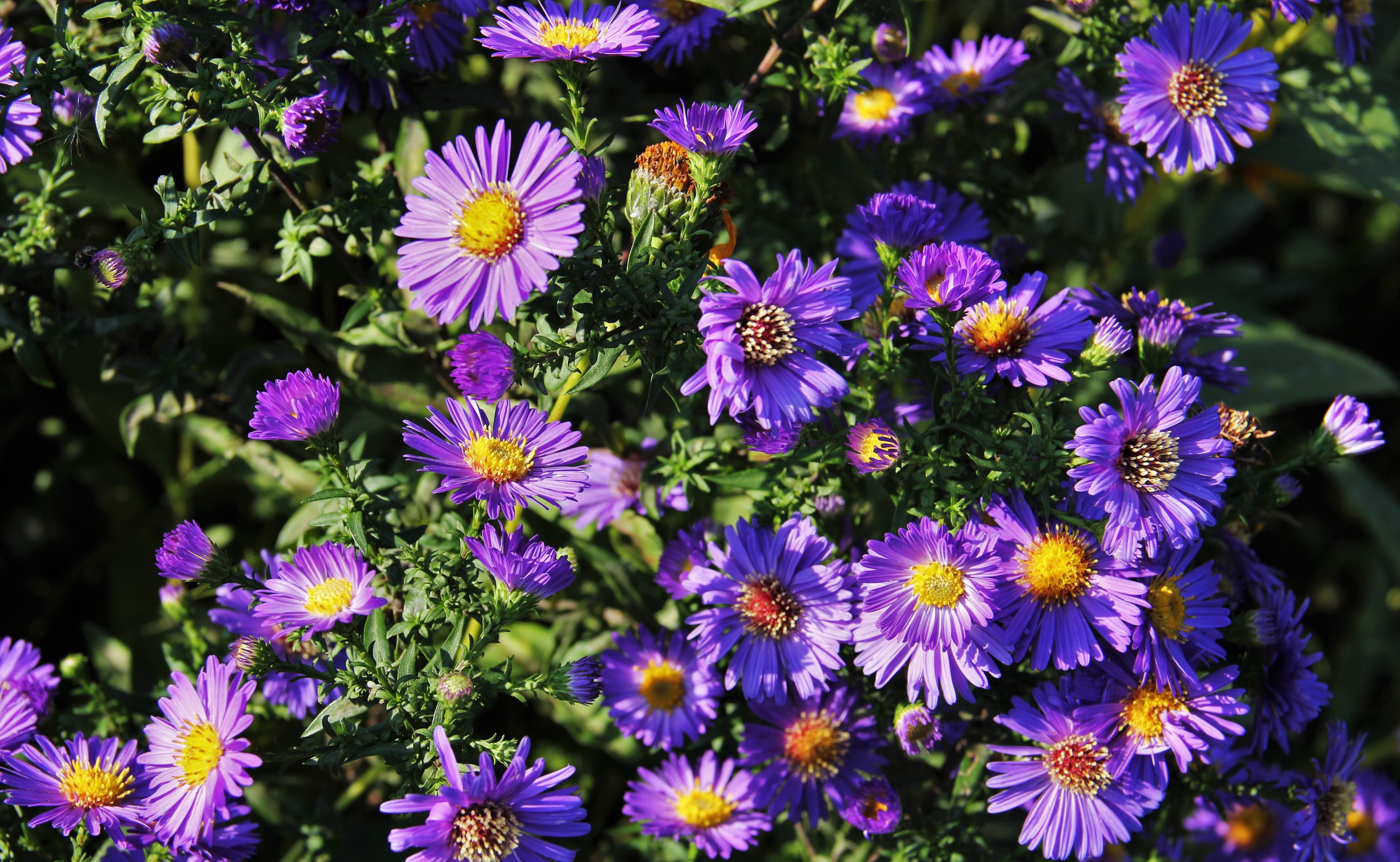 kostenlose foto : natur, wiese, blume, botanik, blau, flora ... - Garten Blumen Blau