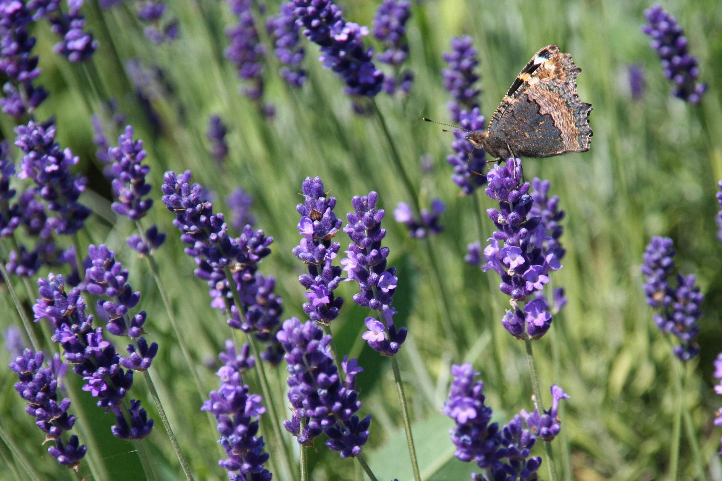 Images Gratuites : la nature, Prairie, herbe, insecte ...
