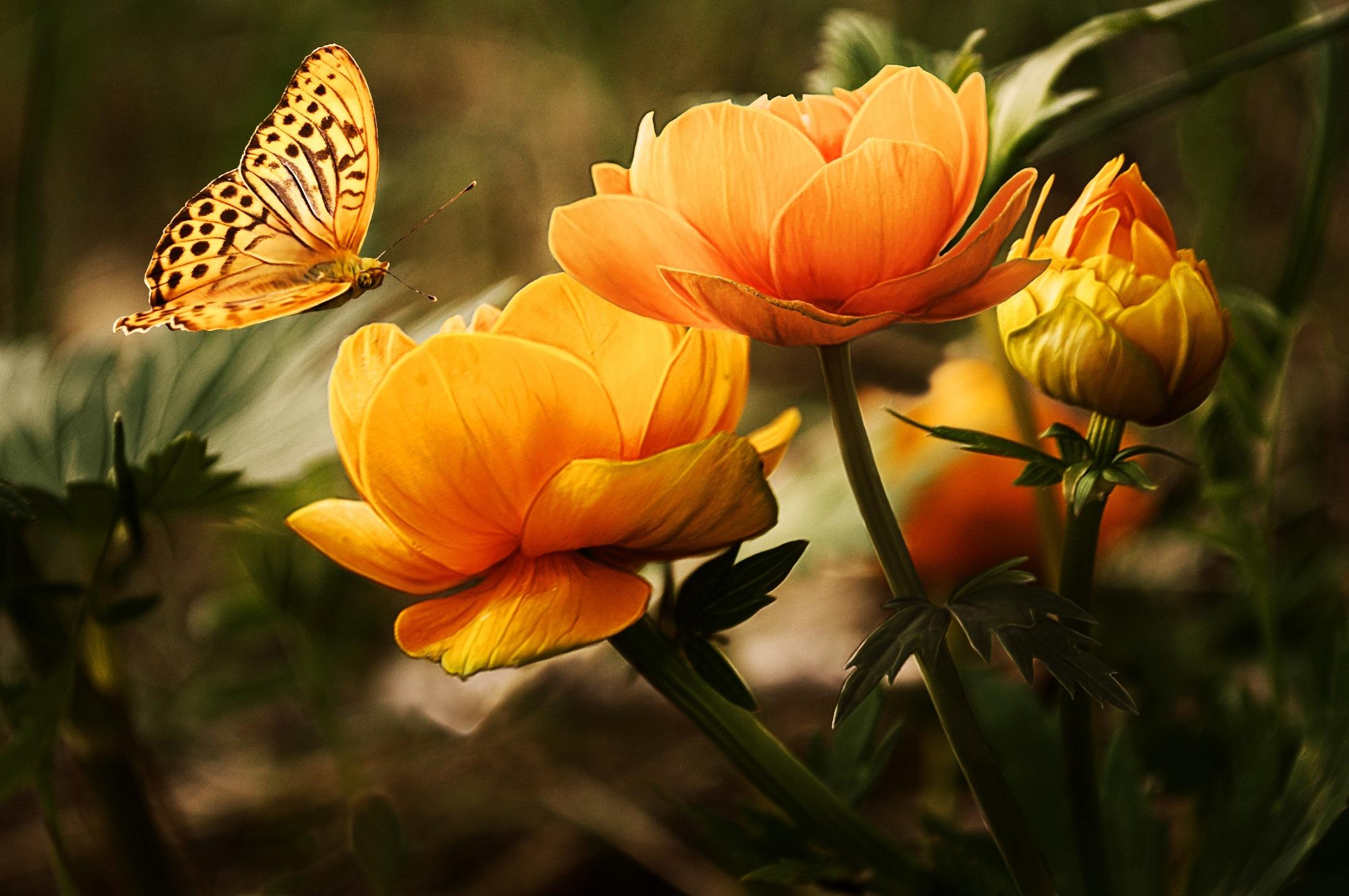 Очень красивое цветы