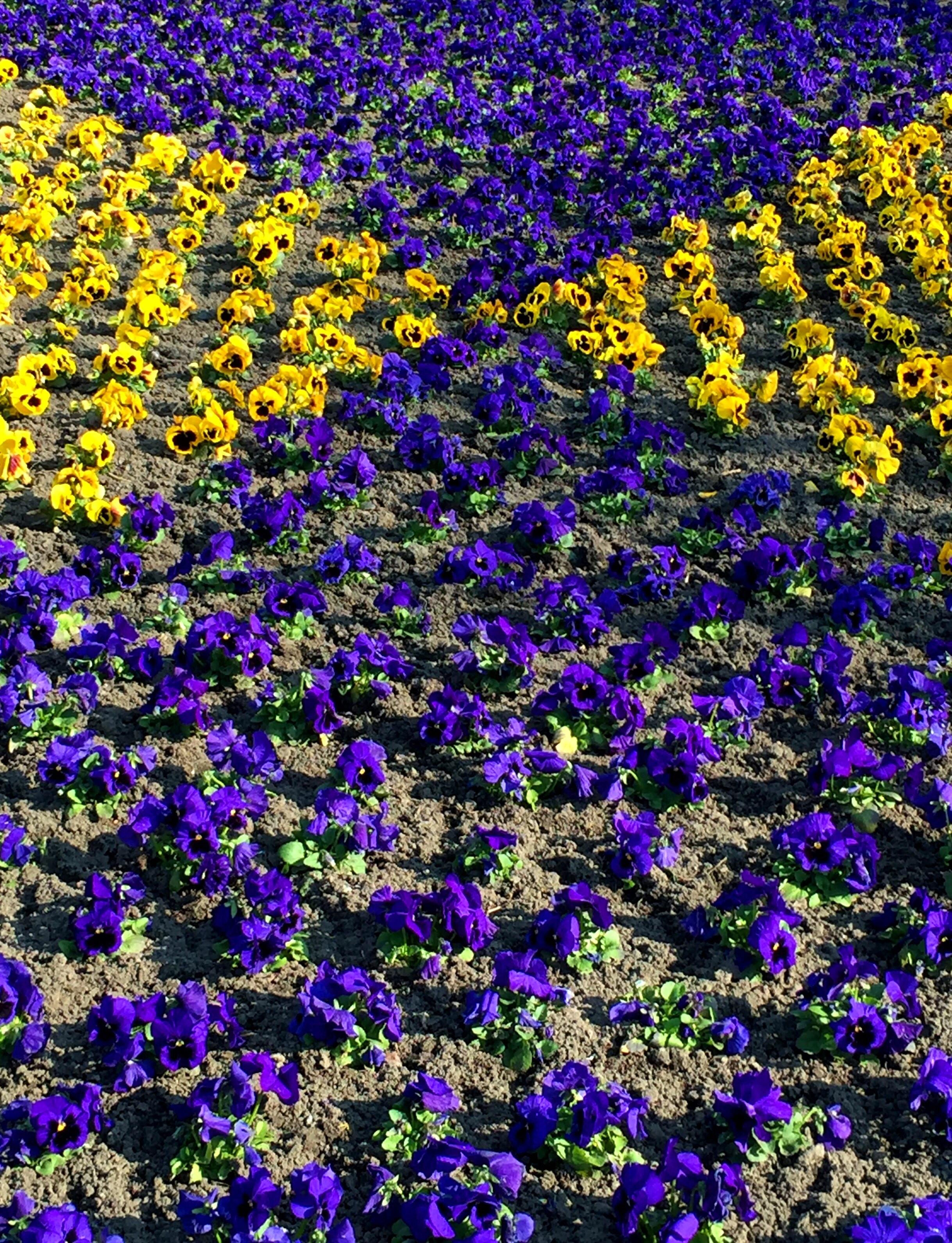 Цветы фото в саду что посадить случай если