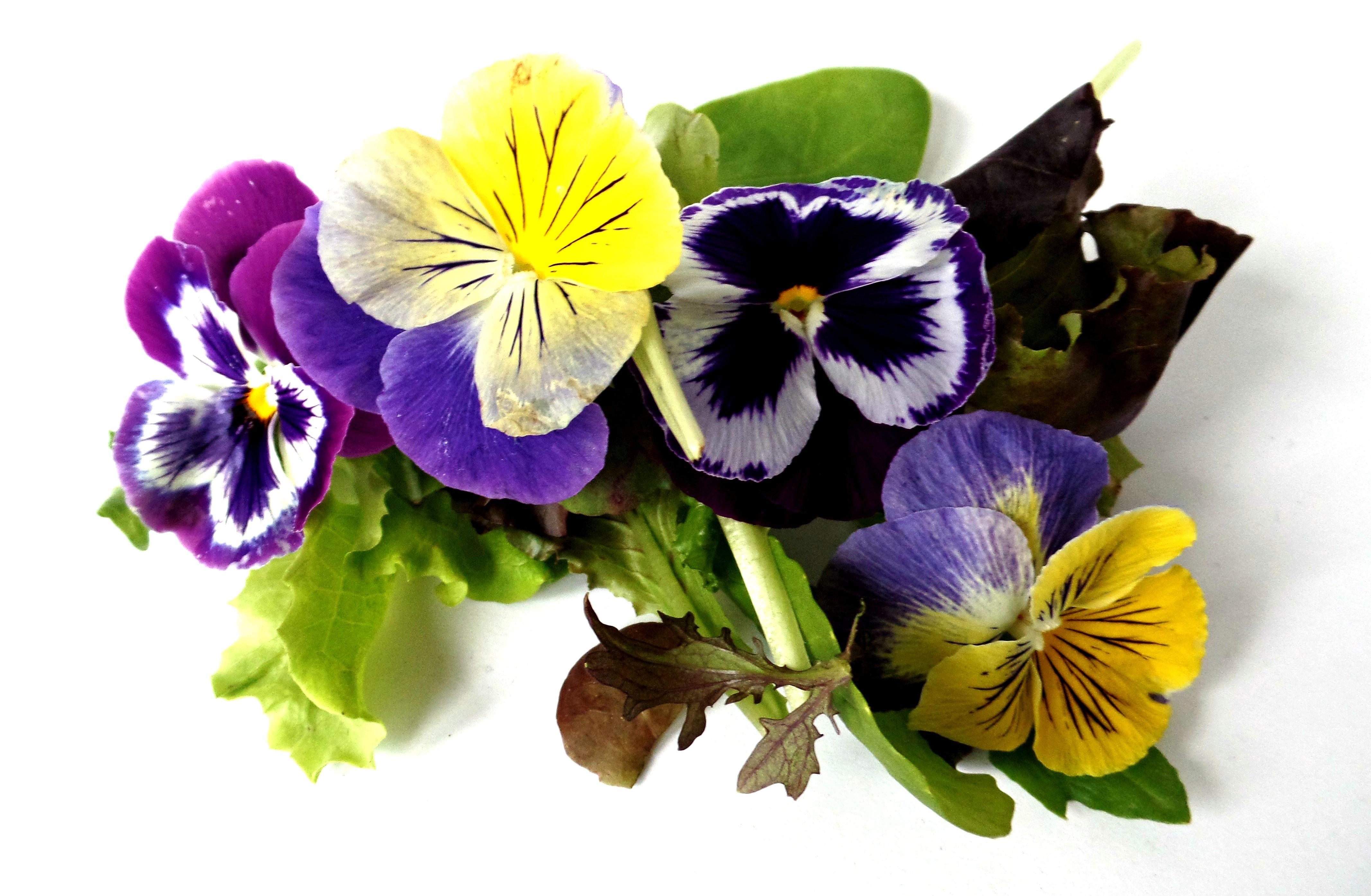 Free Images Meadow Purple Petal Bloom Summer Macro Botany