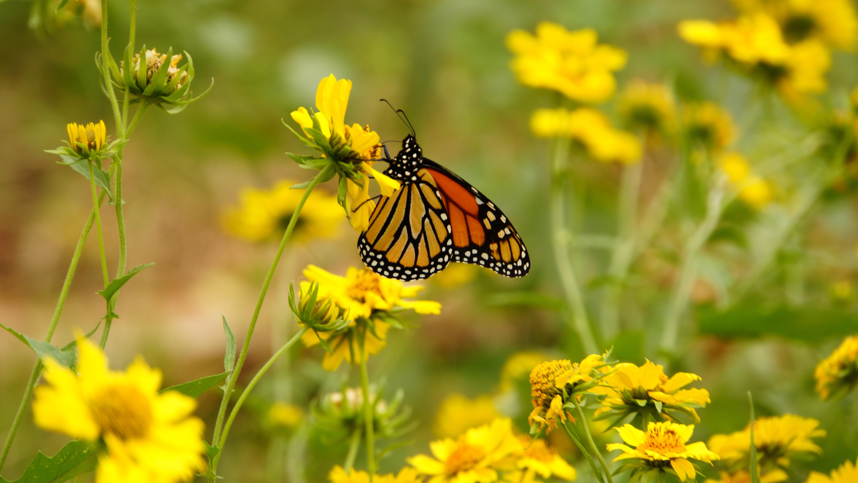 kostenlose foto  natur wiese prärie blume insekt