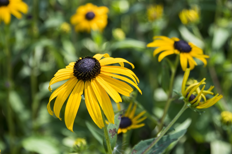 Free Images Nature Meadow Prairie Flower Petal Wildlife