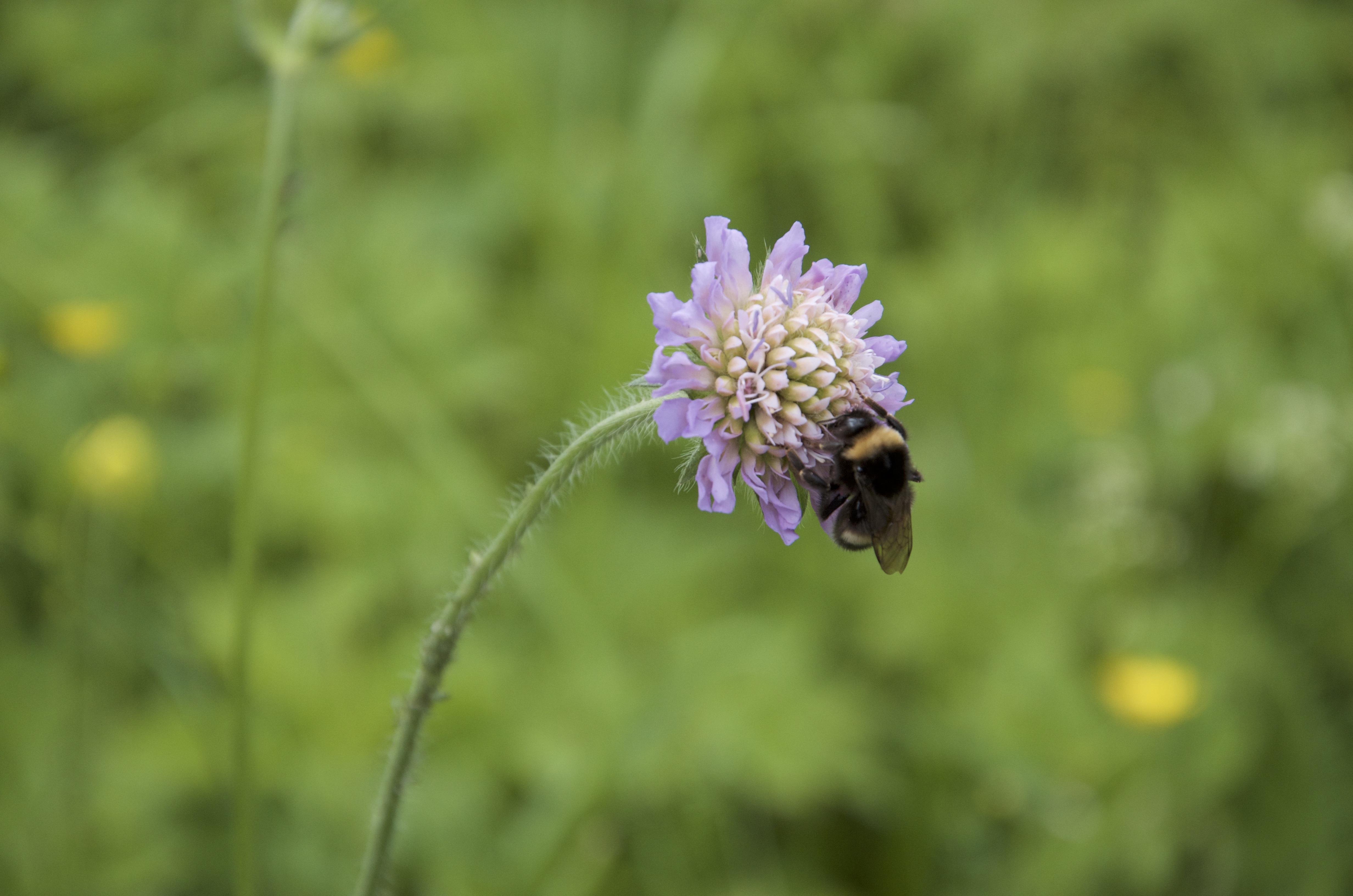 Fotos gratis naturaleza prado pradera polen insecto - Plantas para ahuyentar insectos ...