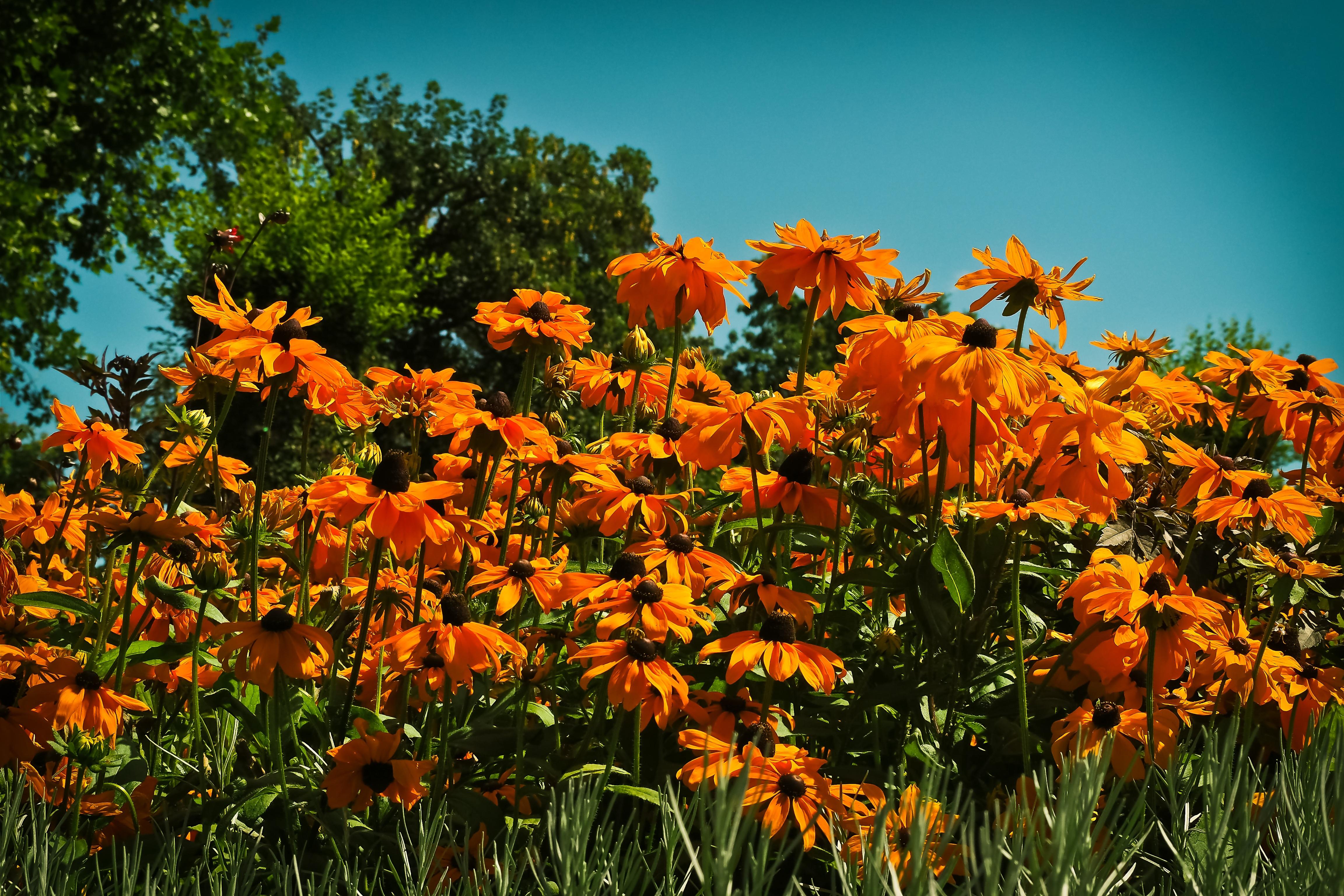 Kostenlose foto : Natur, Wiese, Prärie, Blatt, Blume, blühen, Sommer ...