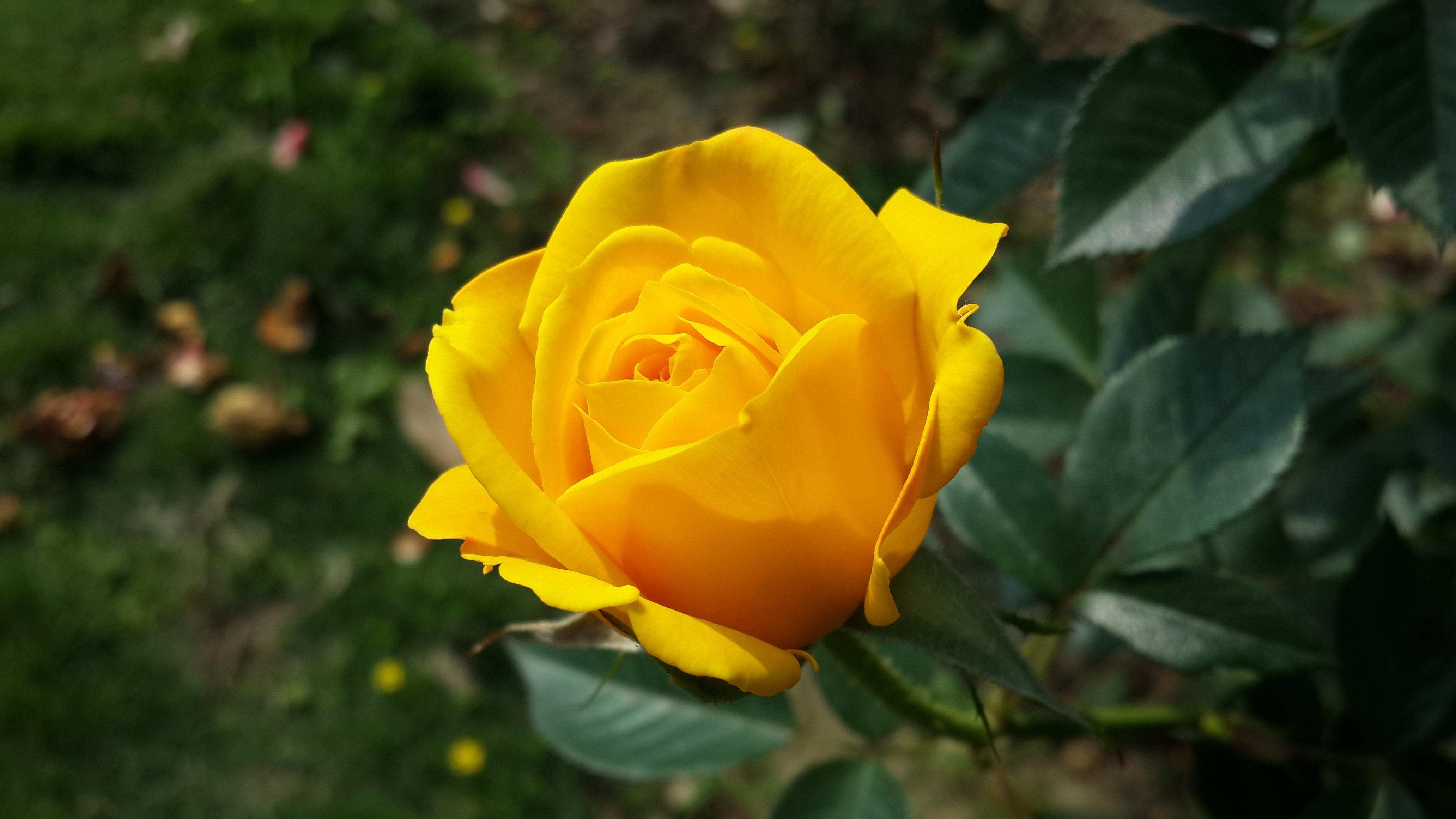 Free Images : Nature, Morning, Flower, Petal, Botany