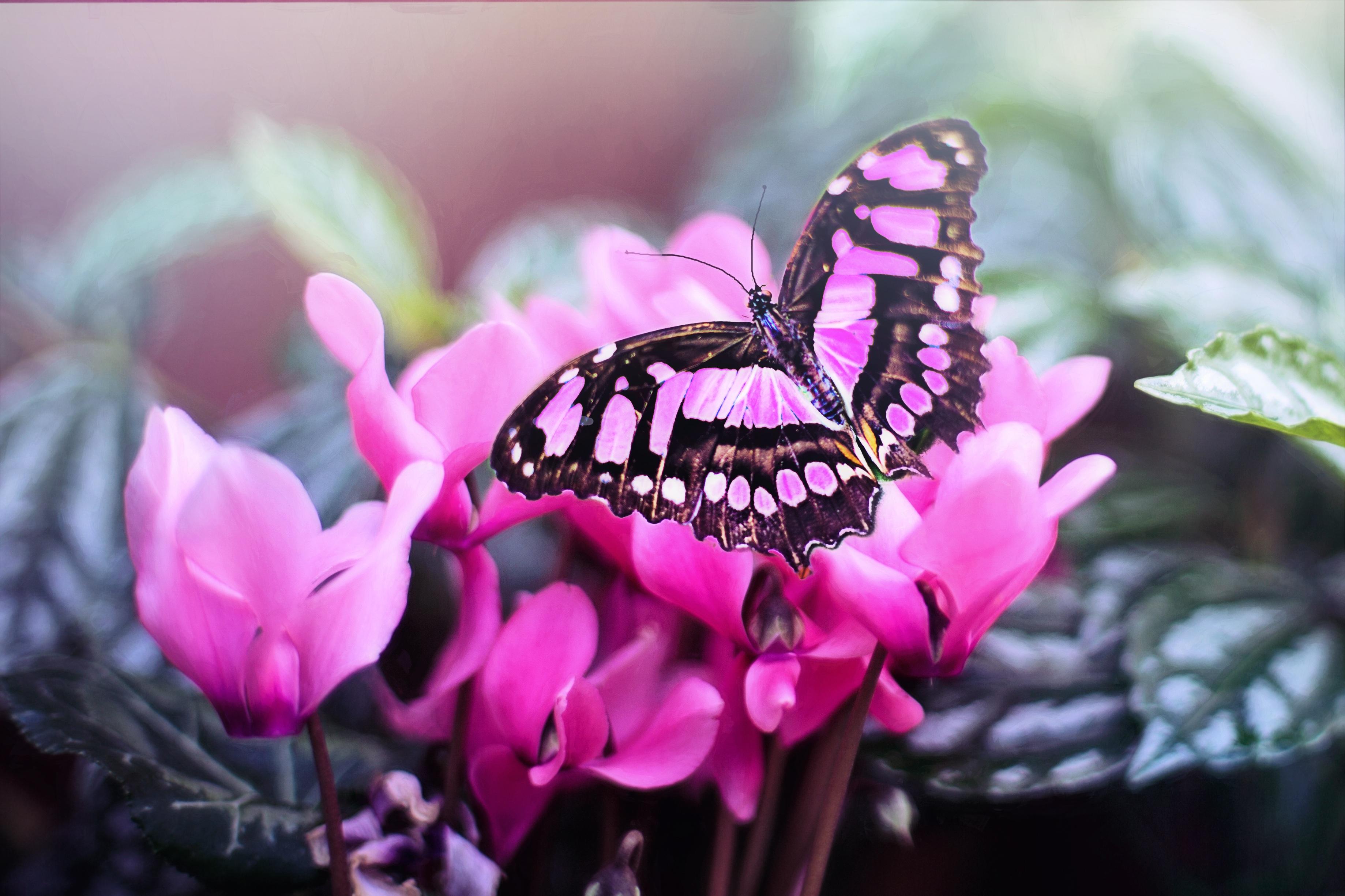 Free Images : nature, plant, flower, petal, summer, spring ...