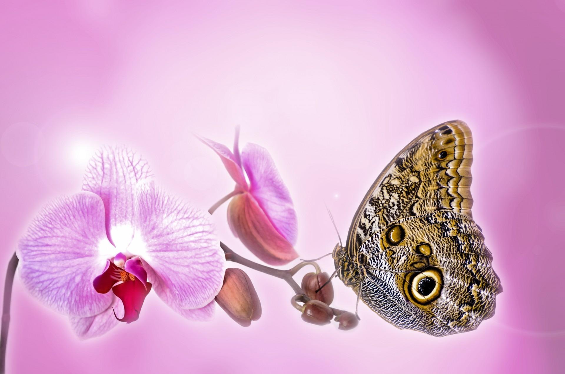 Célèbre Images Gratuites : la nature, plante, la photographie, fleur  RC68