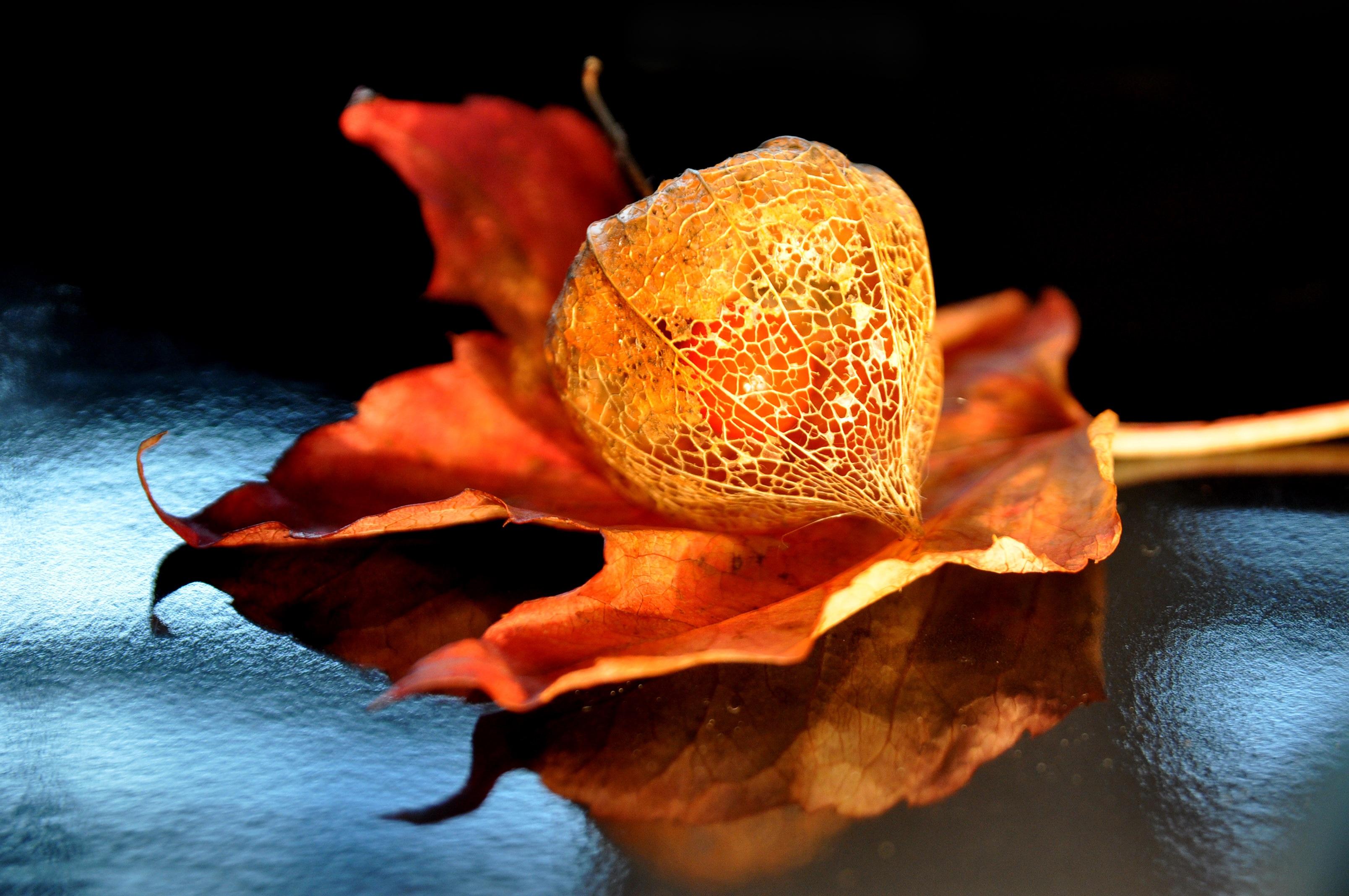 Fotos gratis : naturaleza, fotografía, hoja, flor, naranja, comida ...