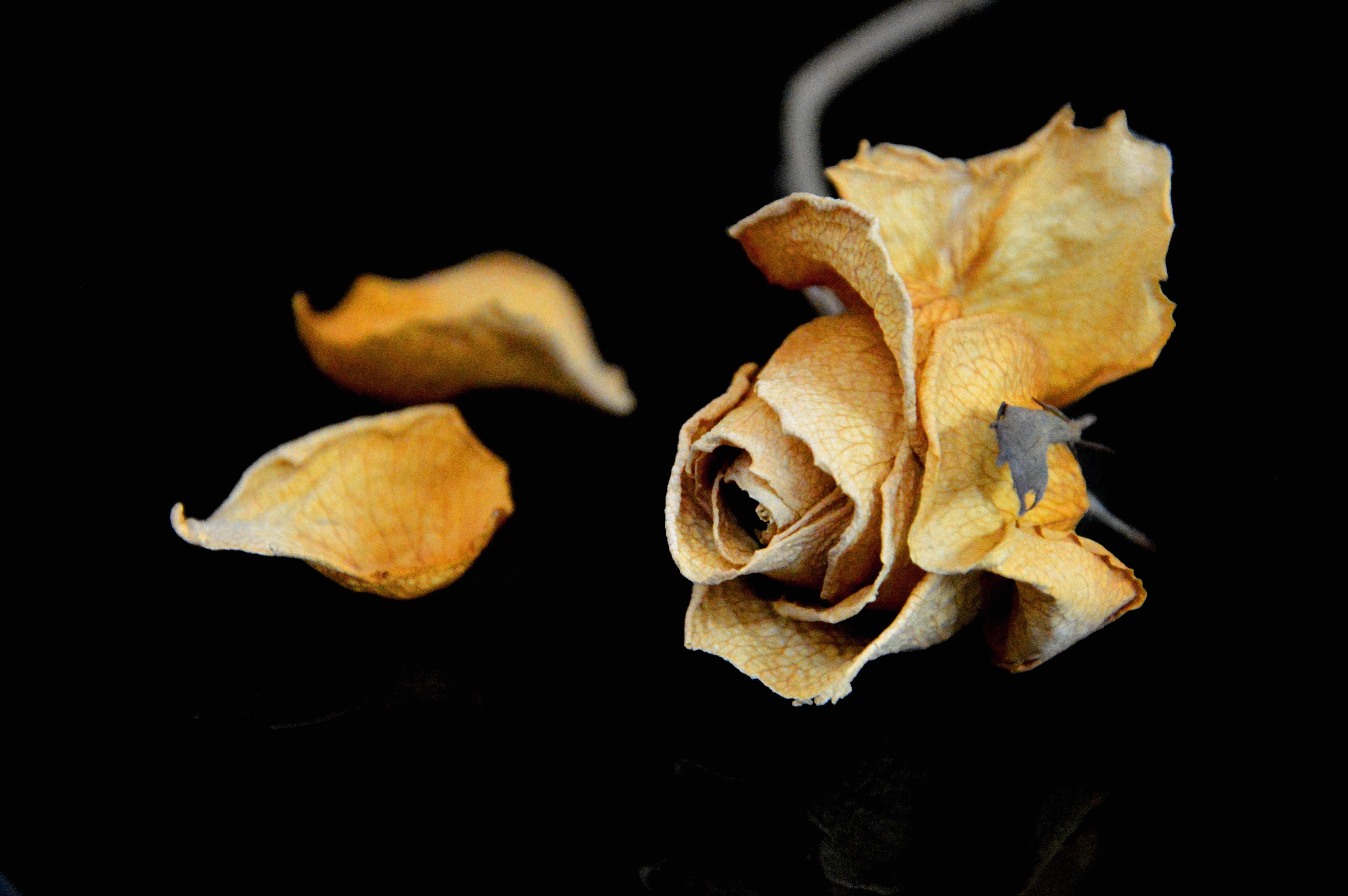 images gratuites : la nature, la photographie, feuille, fleur