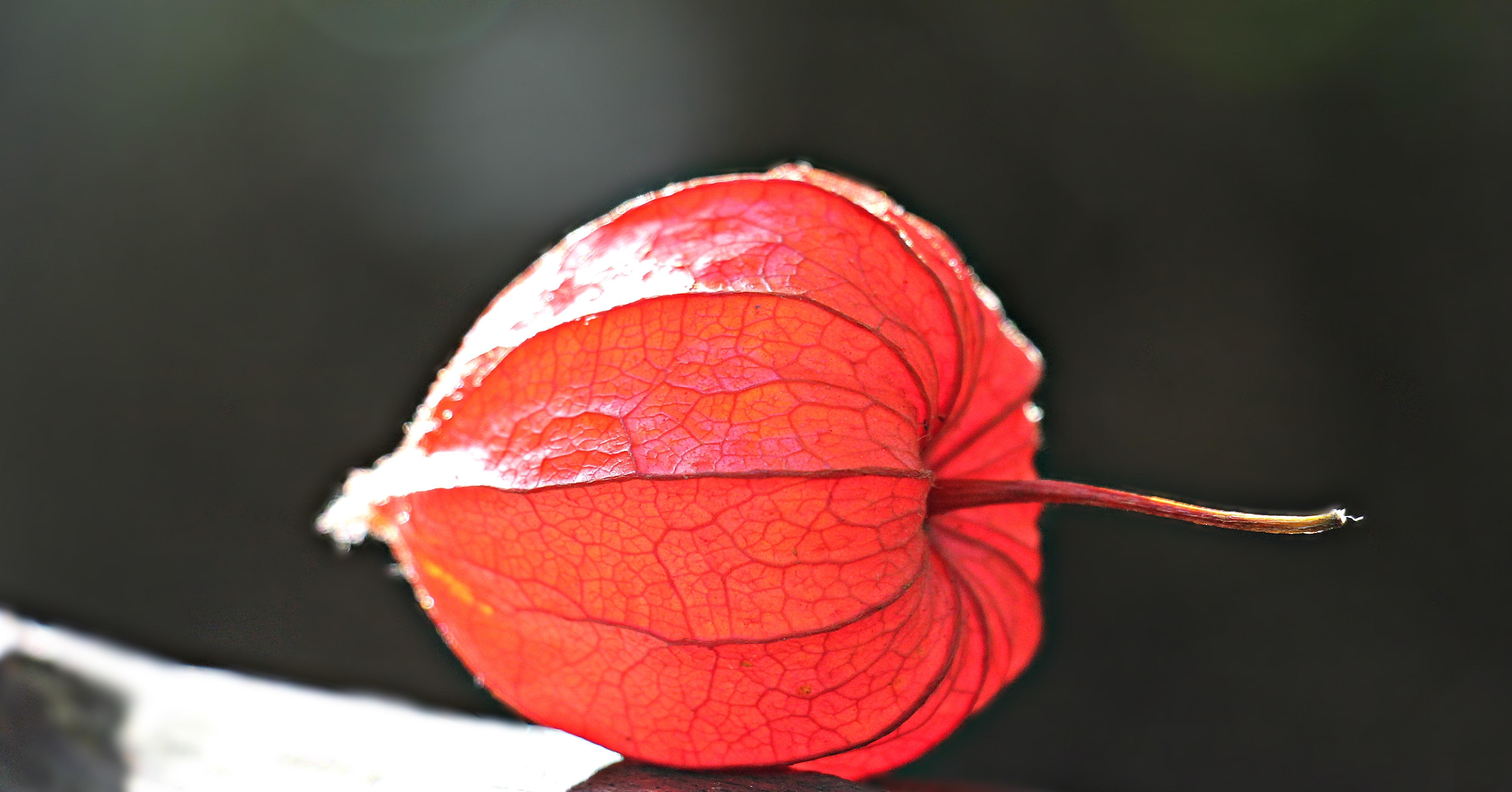Fotos gratis : naturaleza, fotografía, luz de sol, hoja, flor ...