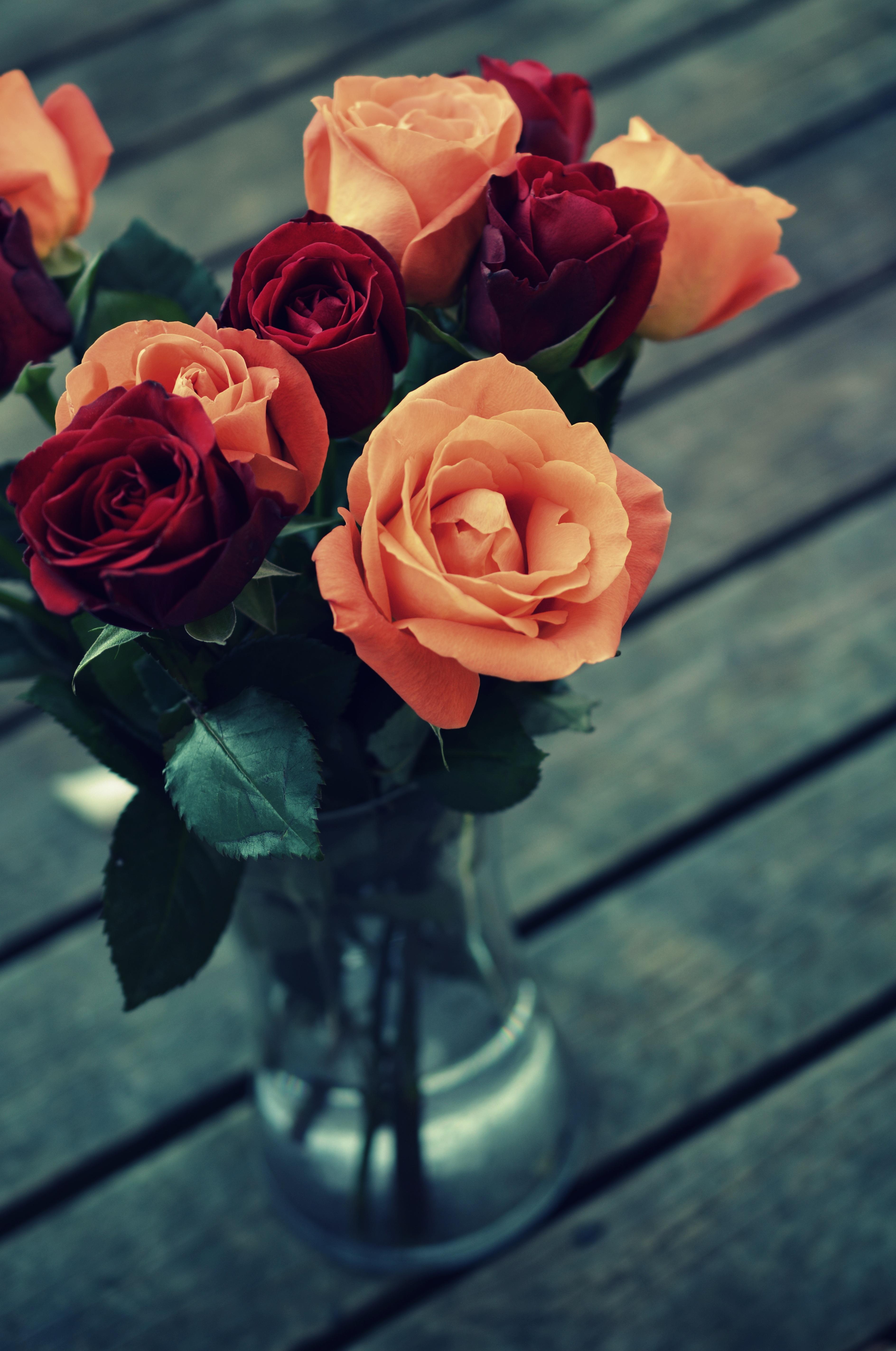 Gambar Alam Menanam Vintage Retro Daun Bunga Warna Berwarna Merah Muda Merapatkan Desain Budidaya Bunga Fotografi Makro Tanaman Berbunga Mawar Taman Keluarga Mawar Buket Bunga Tanaman Tanah 3776x5691 Monika Stawowy