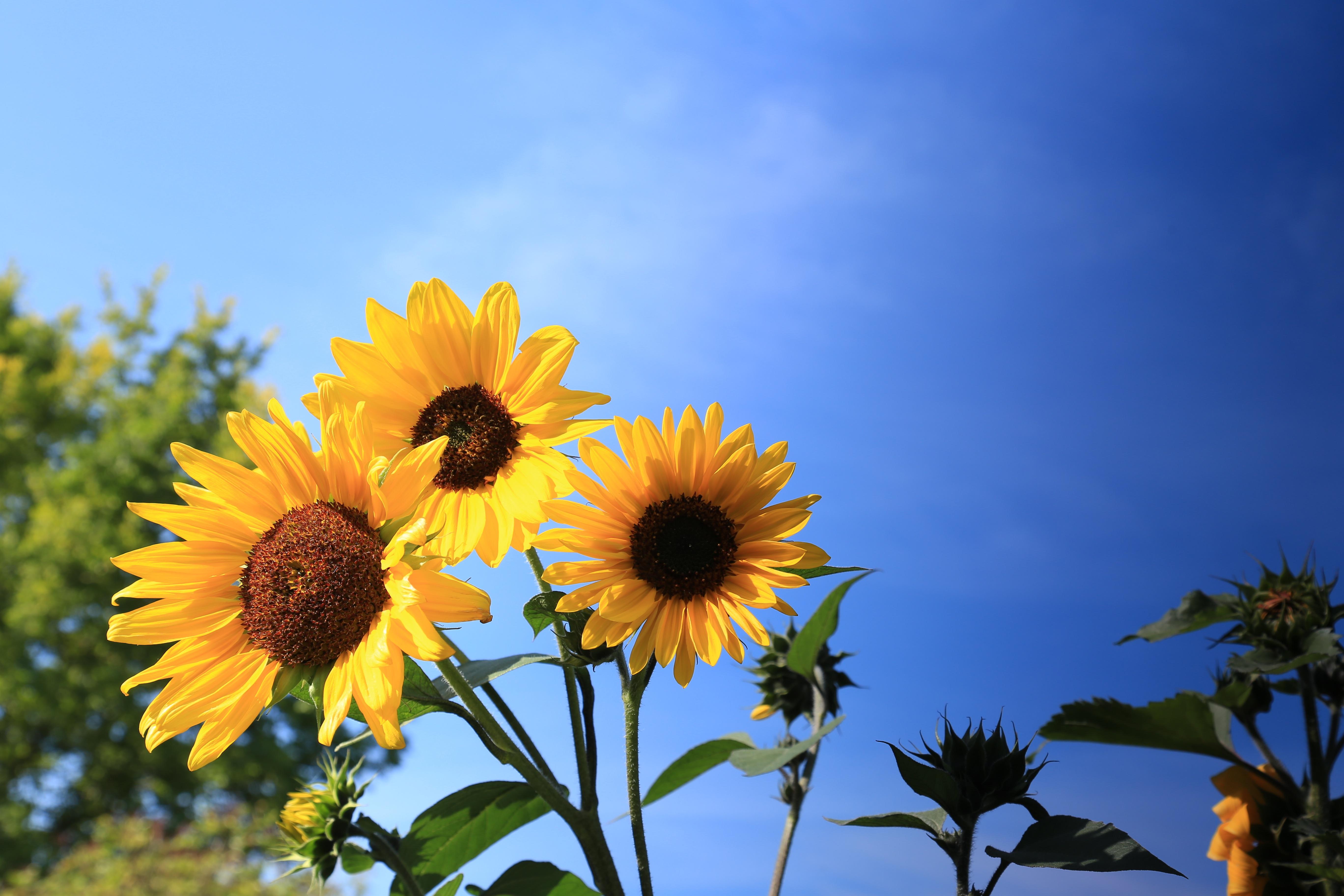 картинки полевые цветы и подсолнухи хорошо прошло, хотя
