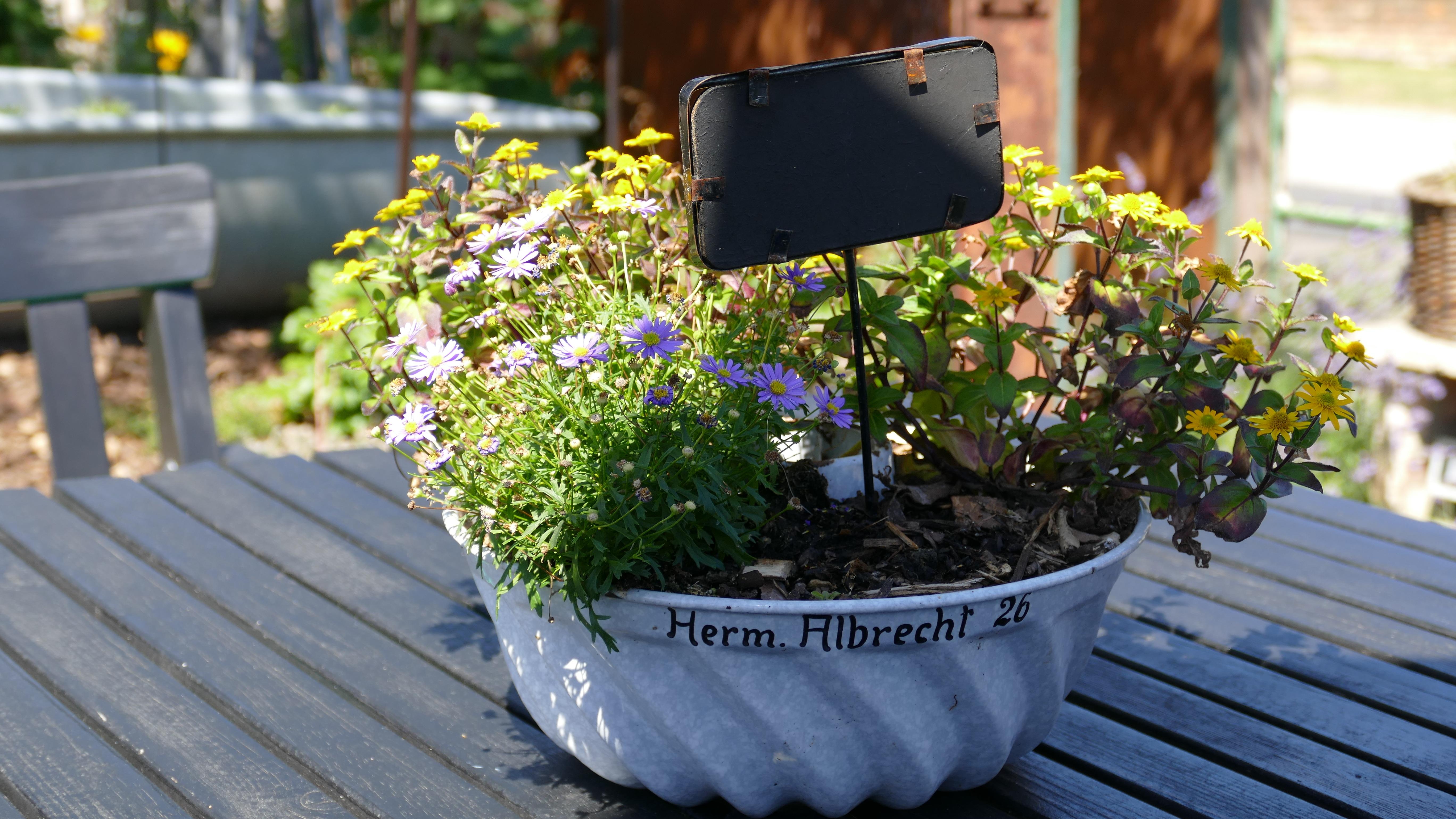 Images Gratuites La Nature Plante Soleil Antique Chaise T D Coration Rural Printemps