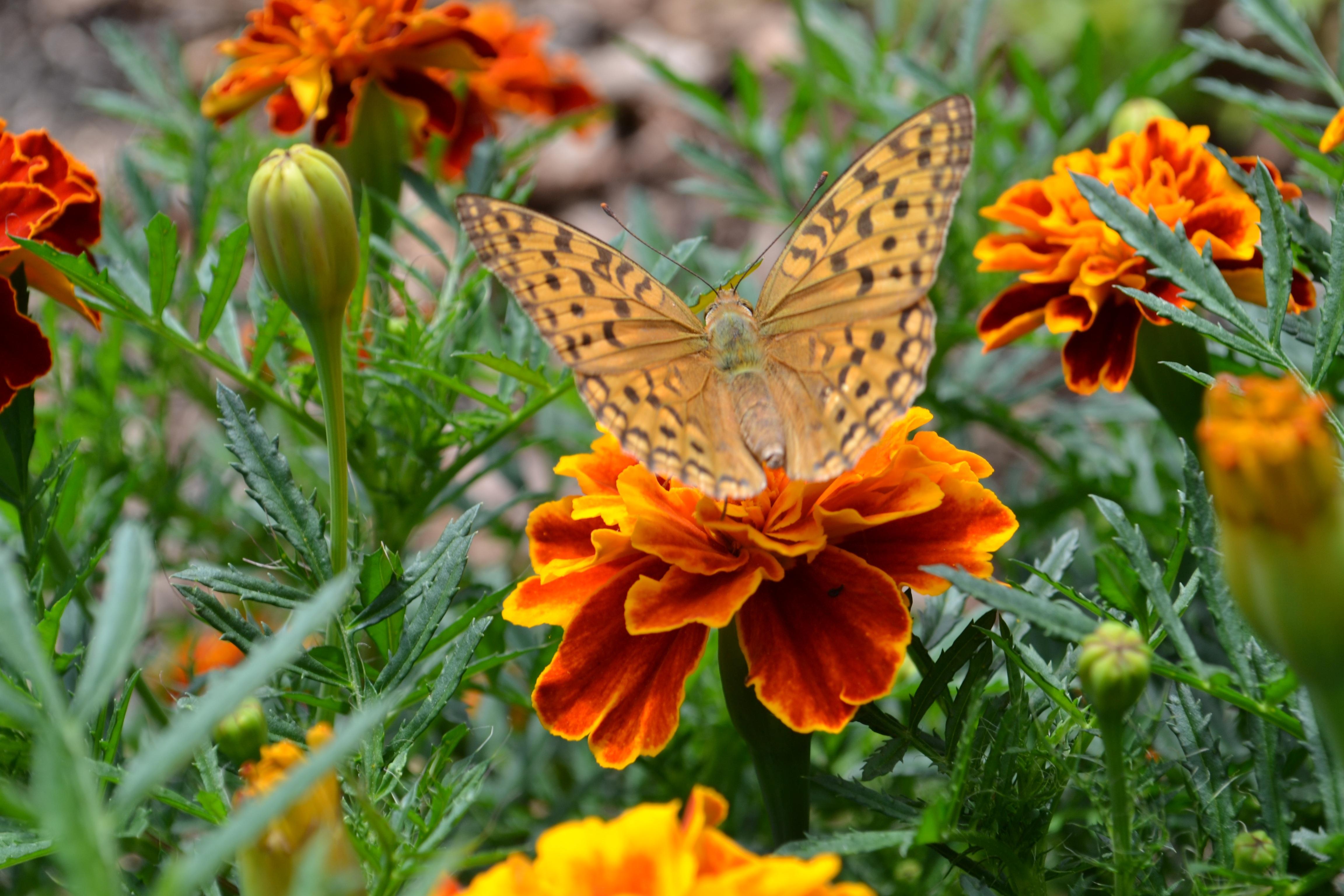 фото красивых цветов живых в природе камеру голую девушку