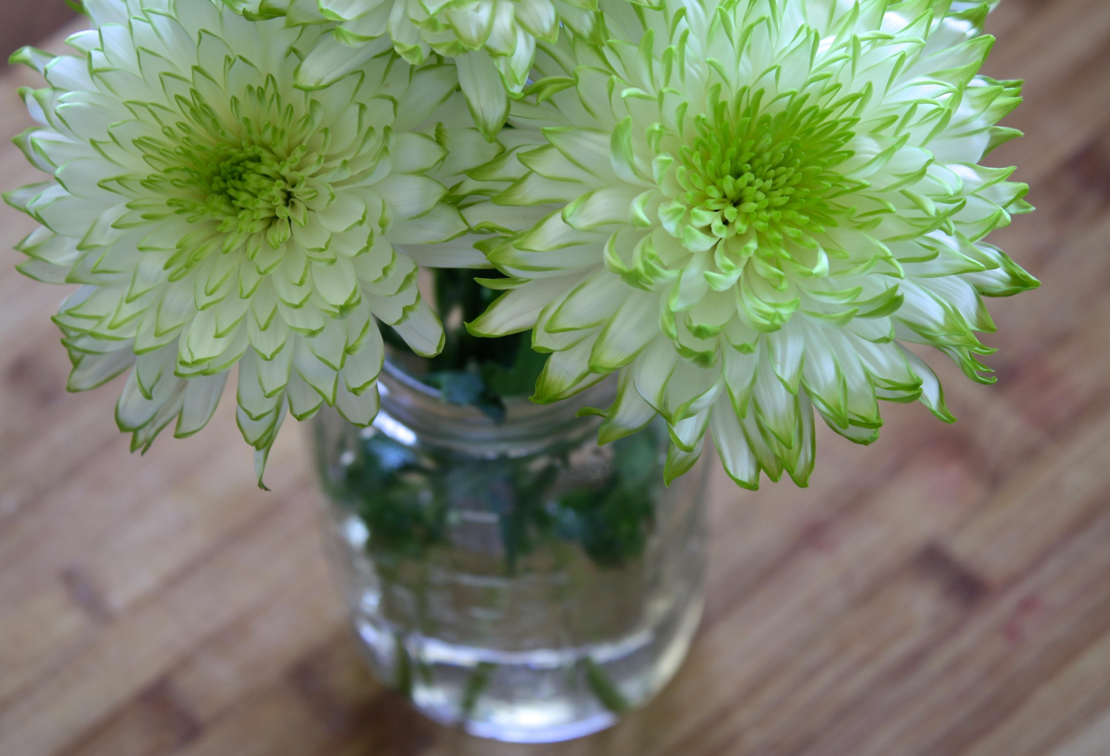 Free Images Nature Sun White House Sunlight Petal Glass Jar