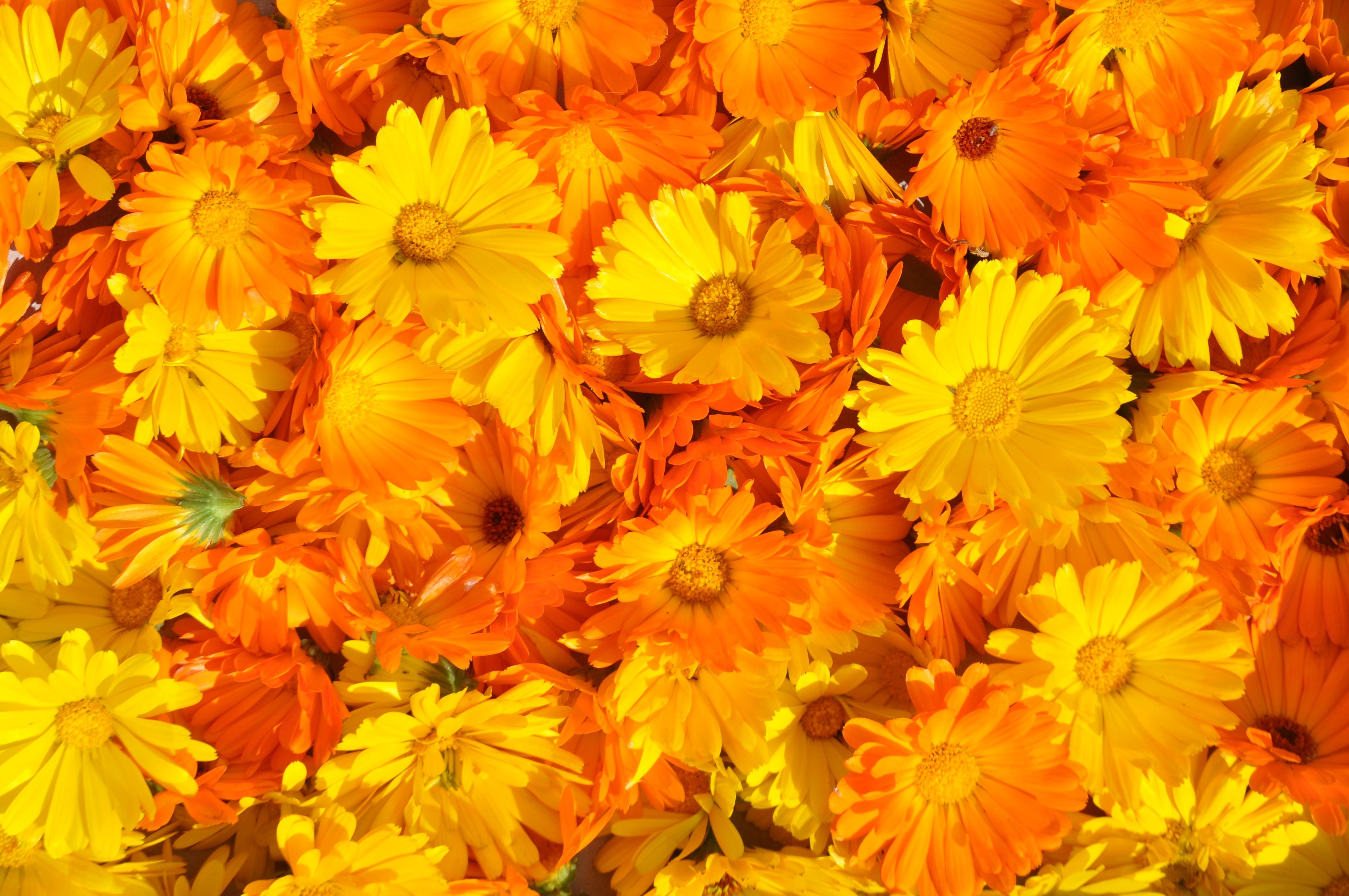 партнеру составило картинки оранжевый фон цветы будь болей