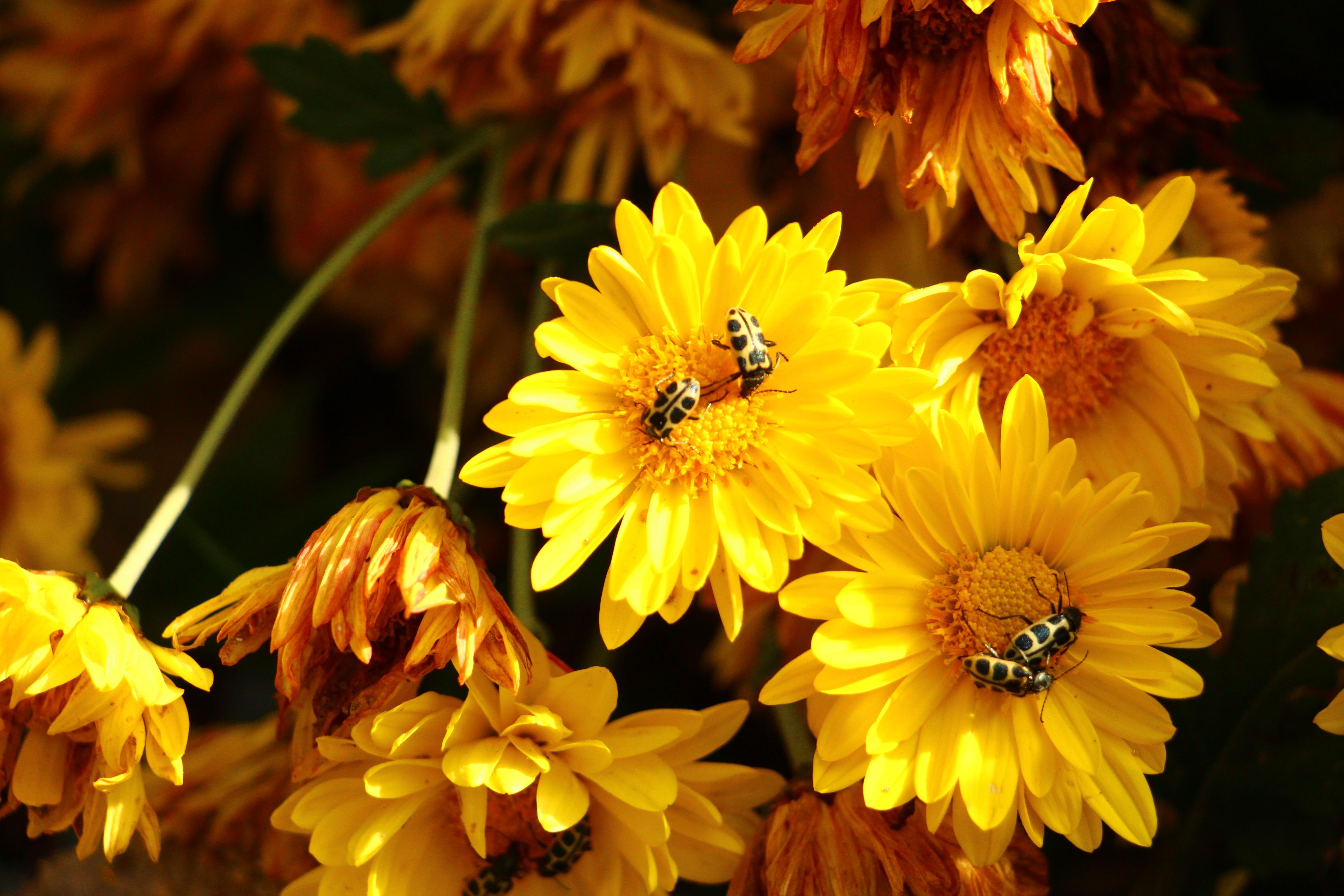 картинка цветы осени шуба это предел