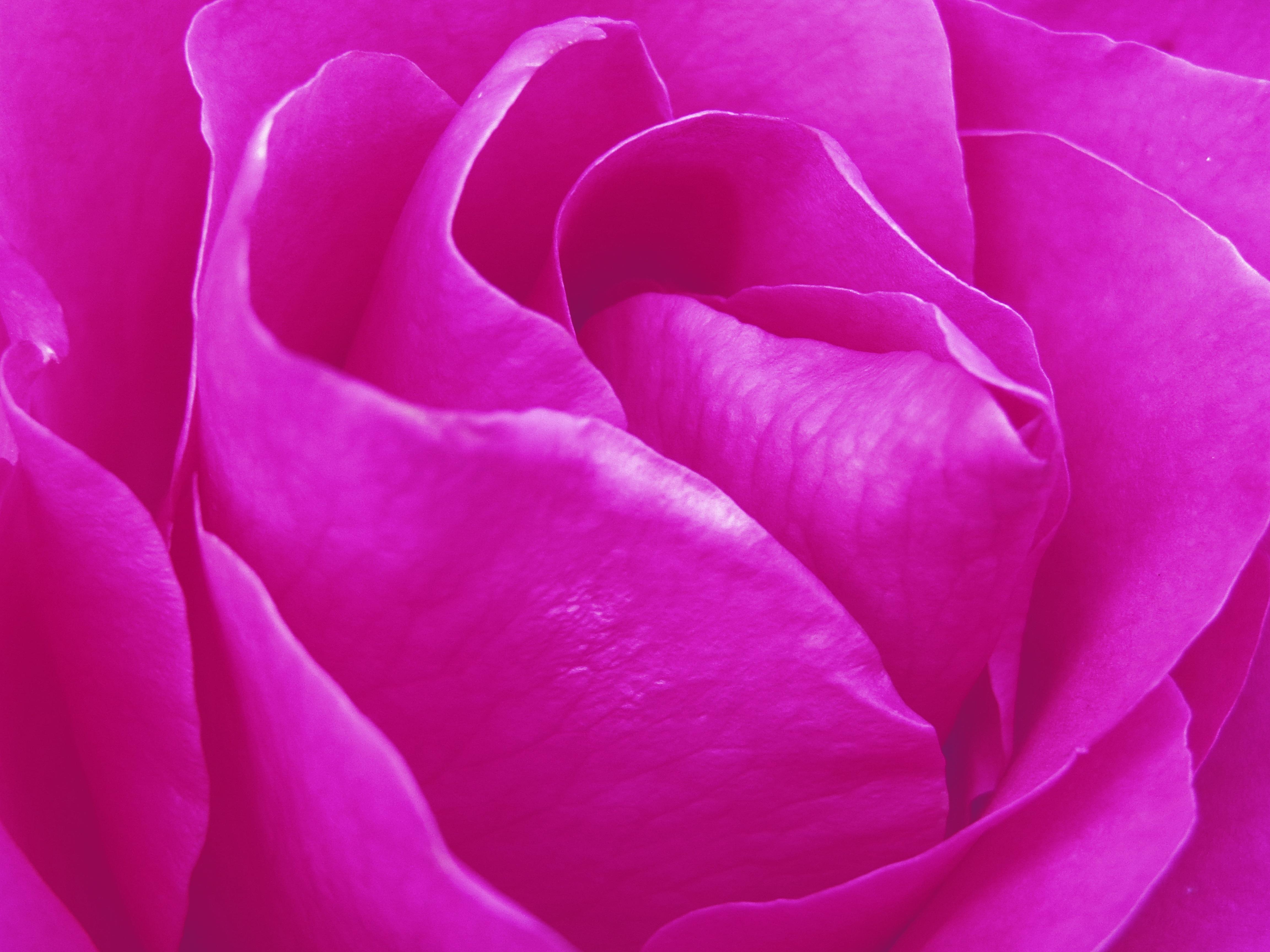 free images nature texture flower petal tulip decoration