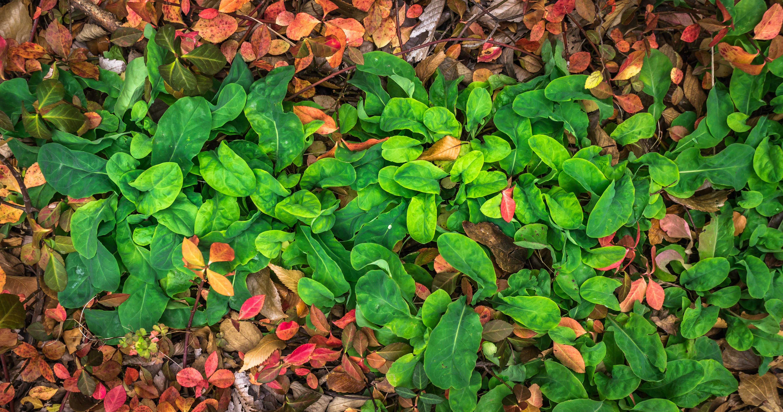 Fotos gratis naturaleza textura hoja verde produce for Hierba jardin