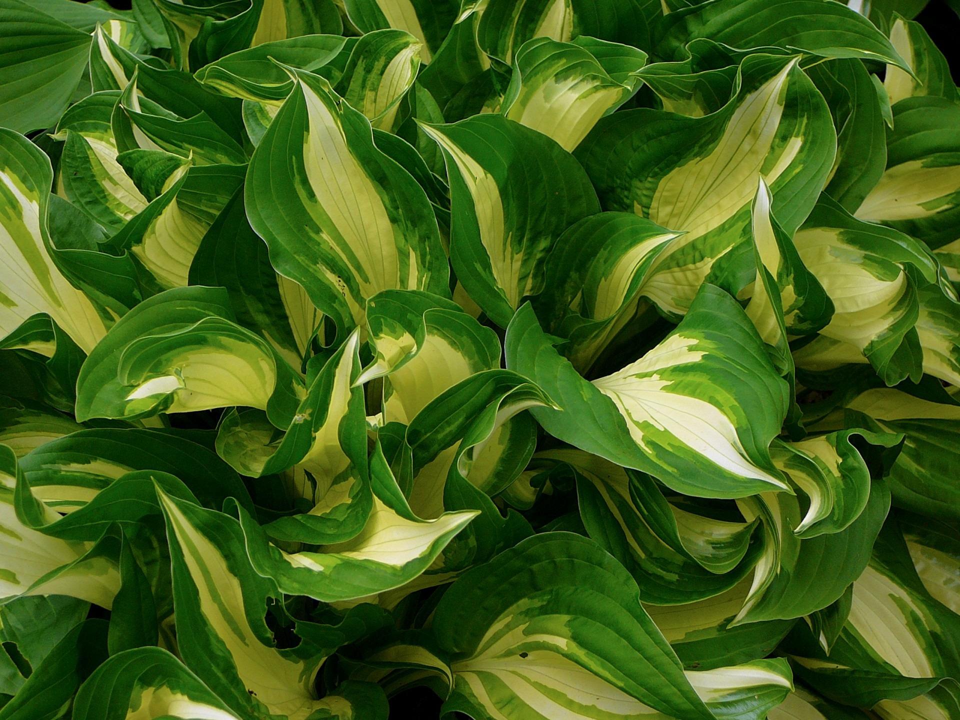 Free Images Nature Texture Leaf Flower Summer Foliage Food