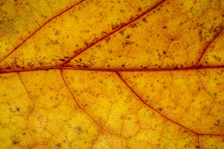 Images gratuites la nature plante texture d 39 or for Soil yellow color